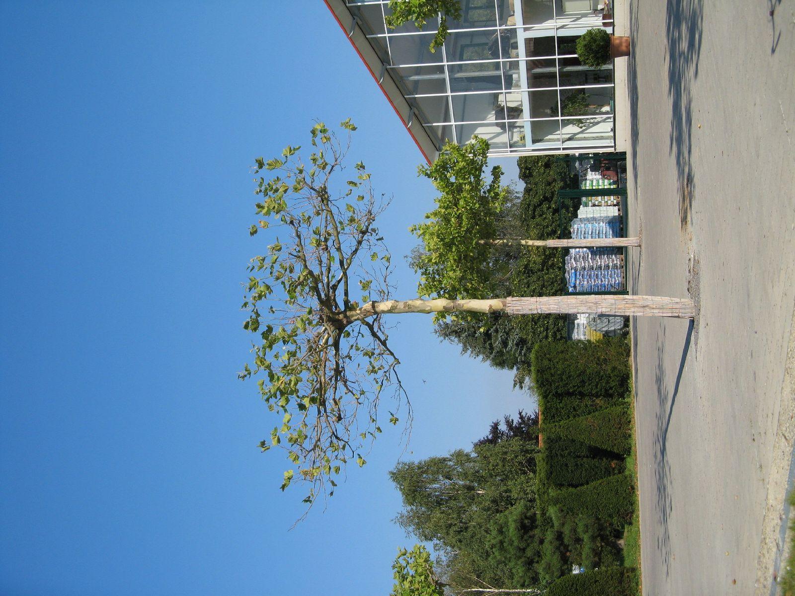 Pflanzen-Baum-Foto_Textur_B_1200