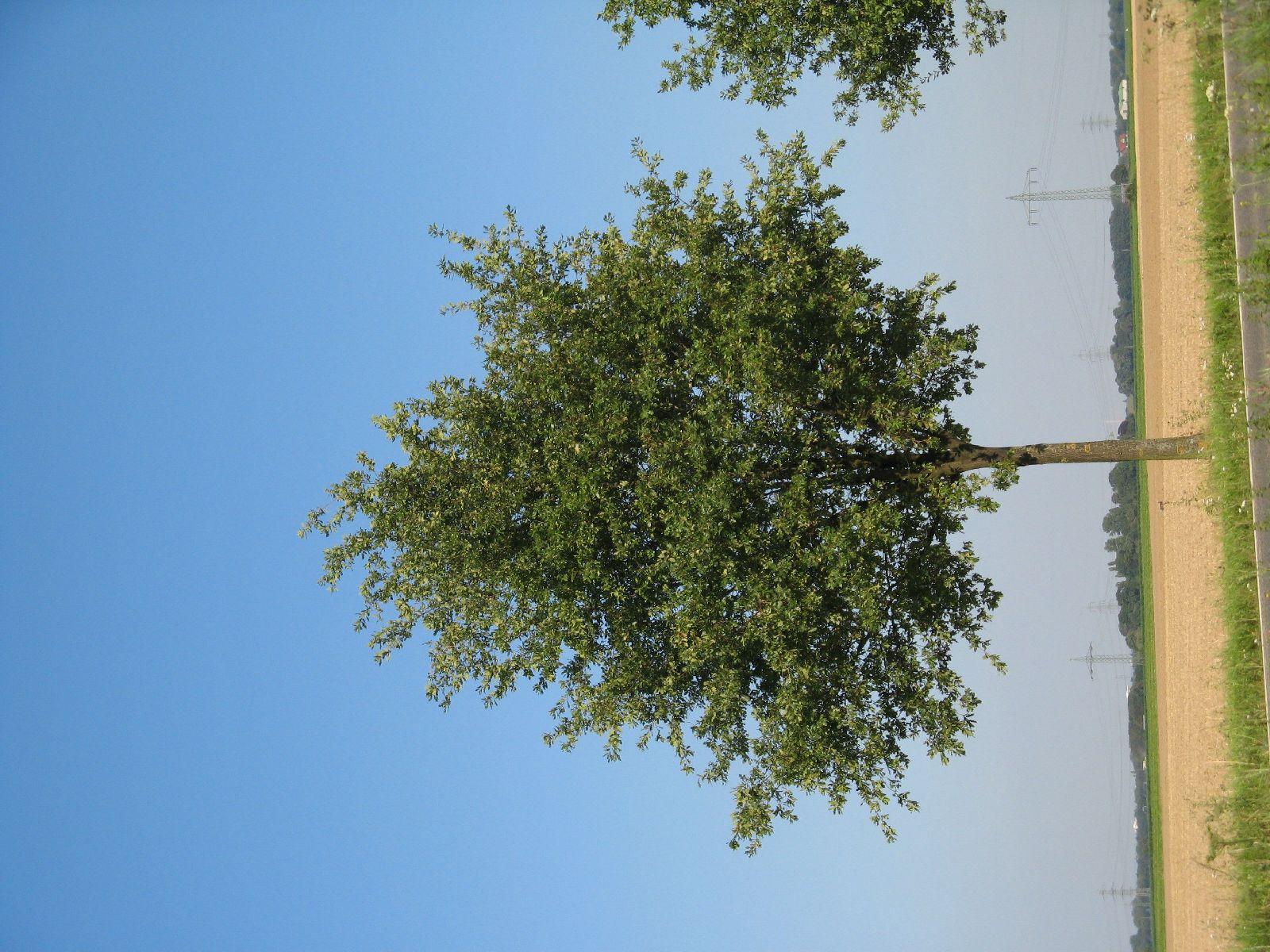 Pflanzen-Baum-Foto_Textur_B_1223