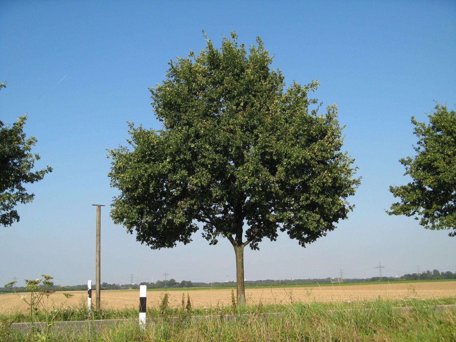 Pflanzen-Baum-Foto_Textur_B_1226