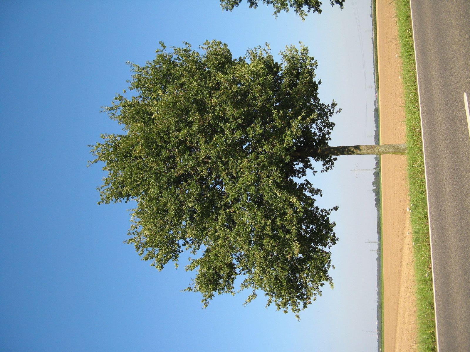 Pflanzen-Baum-Foto_Textur_B_1230