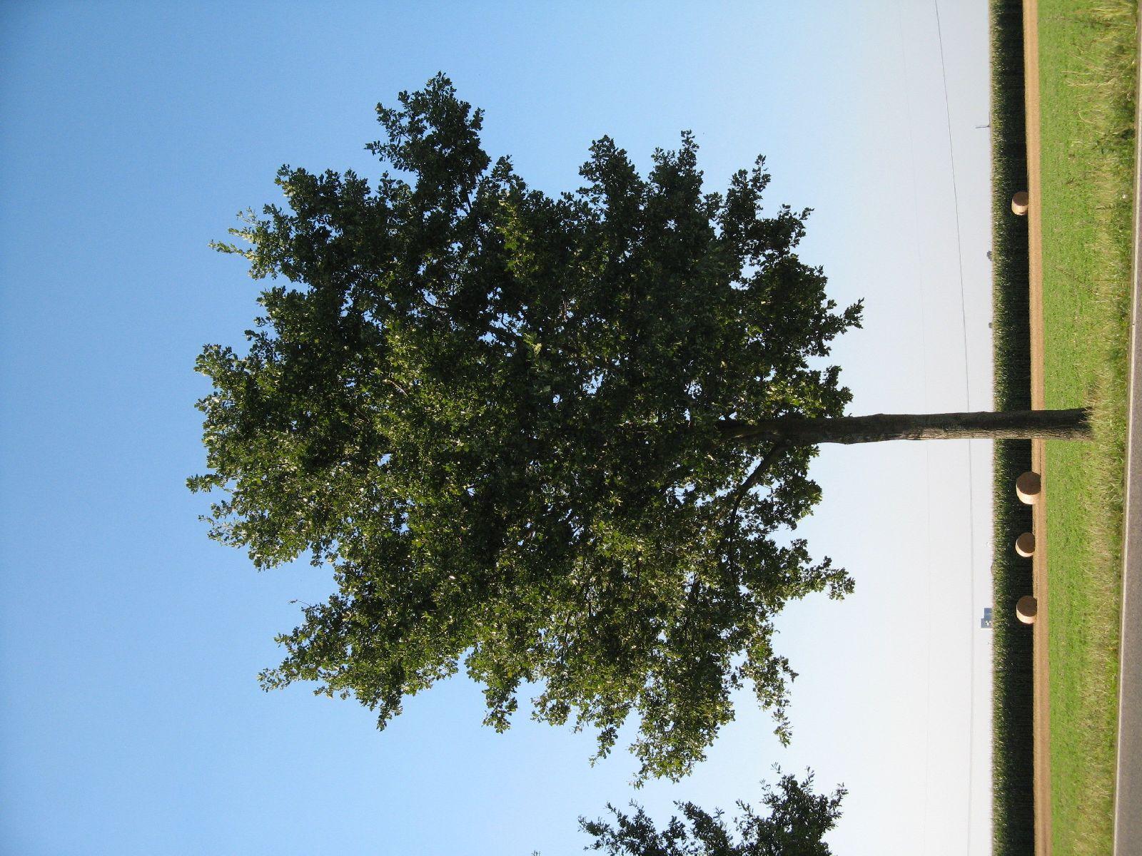 Pflanzen-Baum-Foto_Textur_B_1249