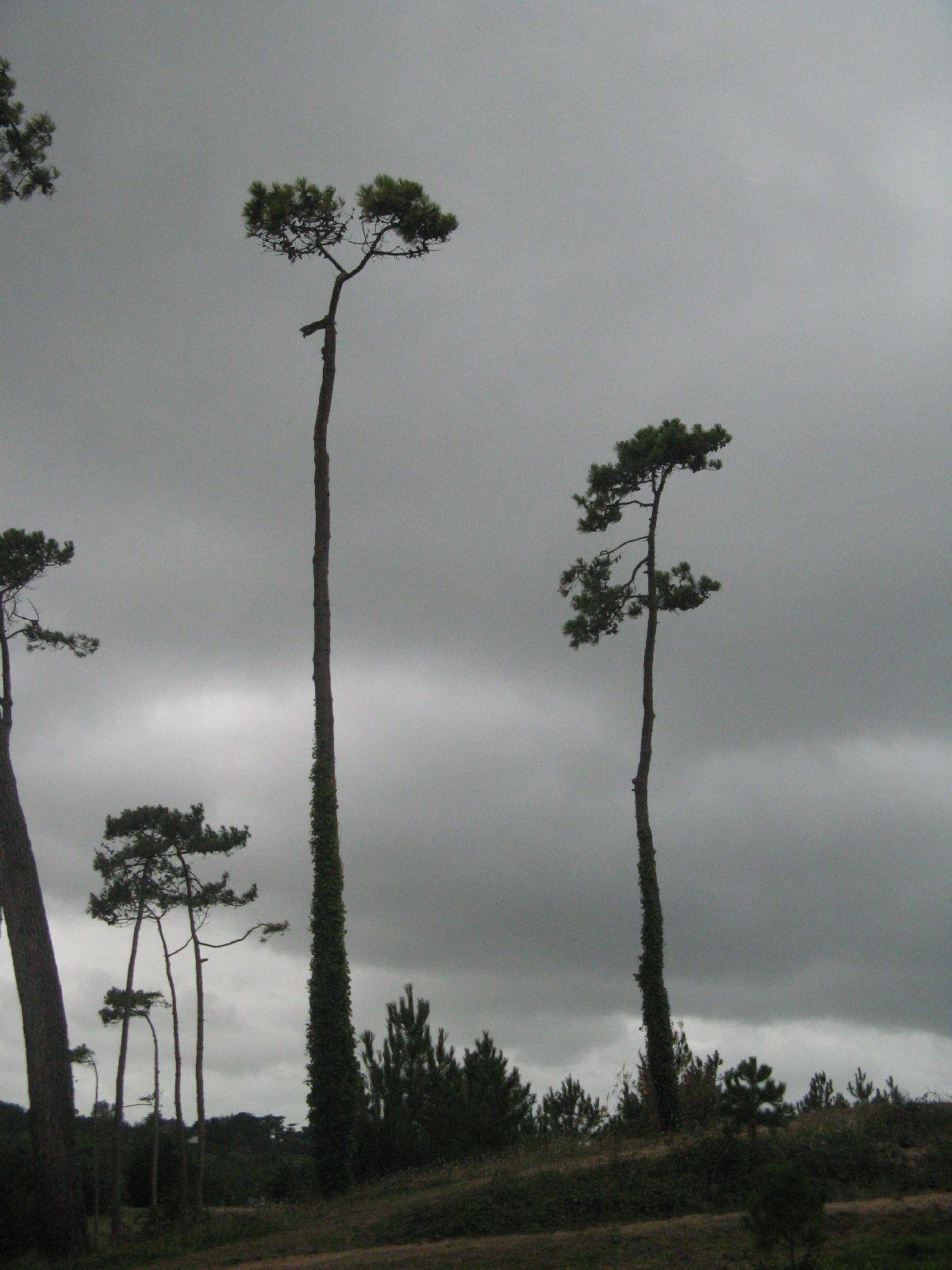 Pflanzen-Baum-Foto_Textur_B_2410
