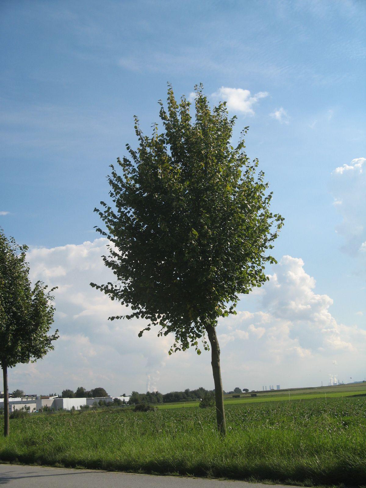 Pflanzen-Baum-Foto_Textur_B_26940