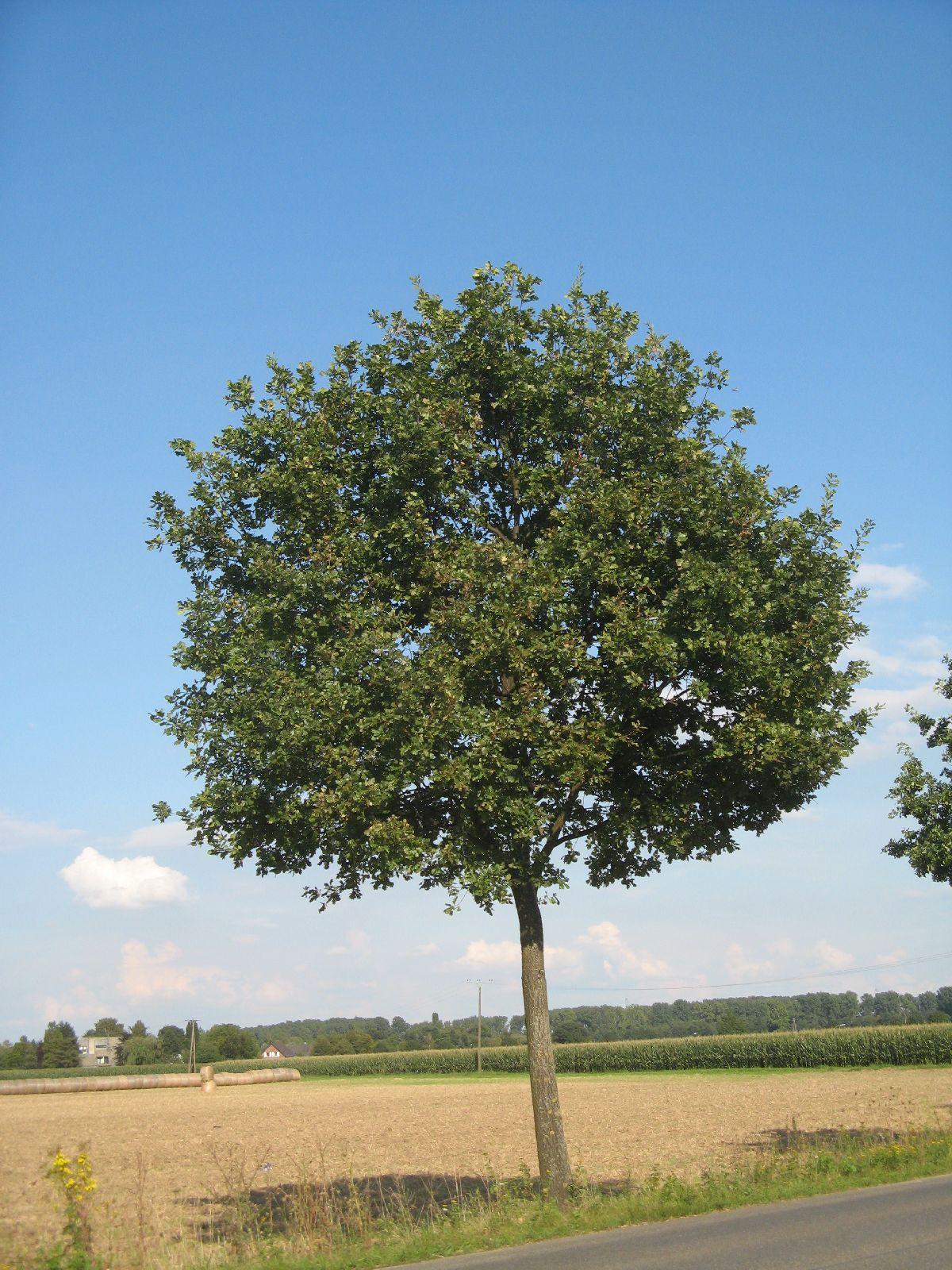 Pflanzen-Baum-Foto_Textur_B_27140