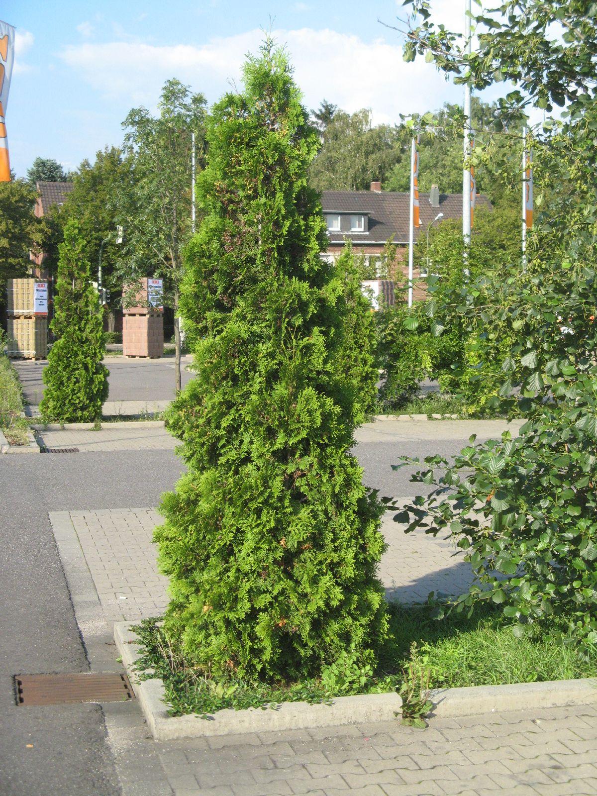 Pflanzen-Baum-Foto_Textur_B_2739