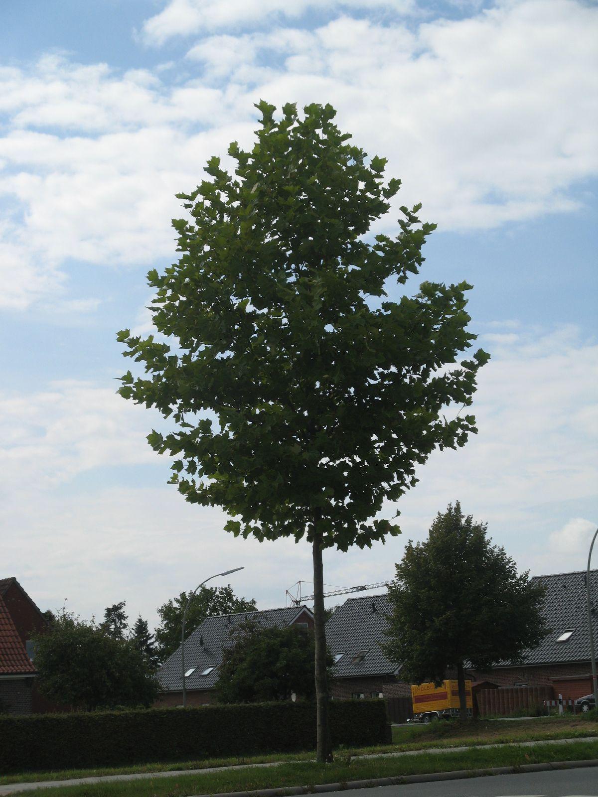 Pflanzen-Baum-Foto_Textur_B_2859
