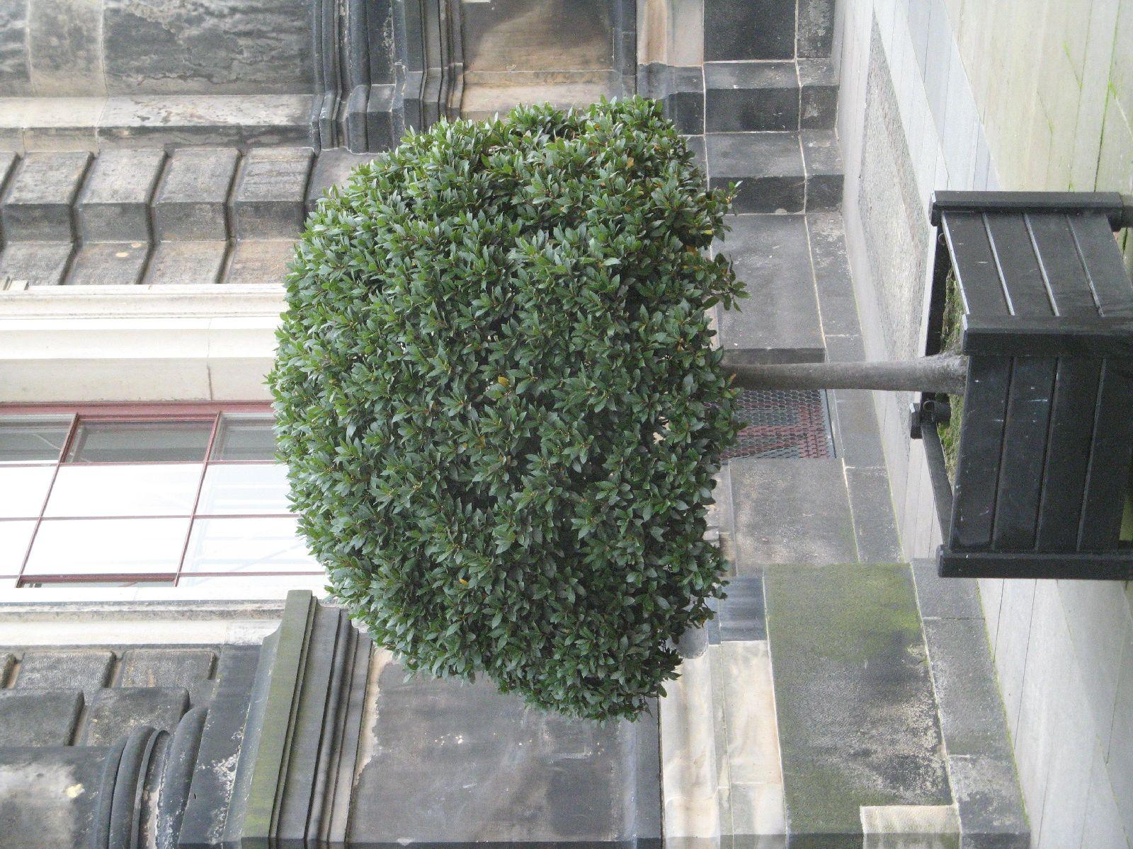 Pflanzen-Baum-Foto_Textur_B_3619