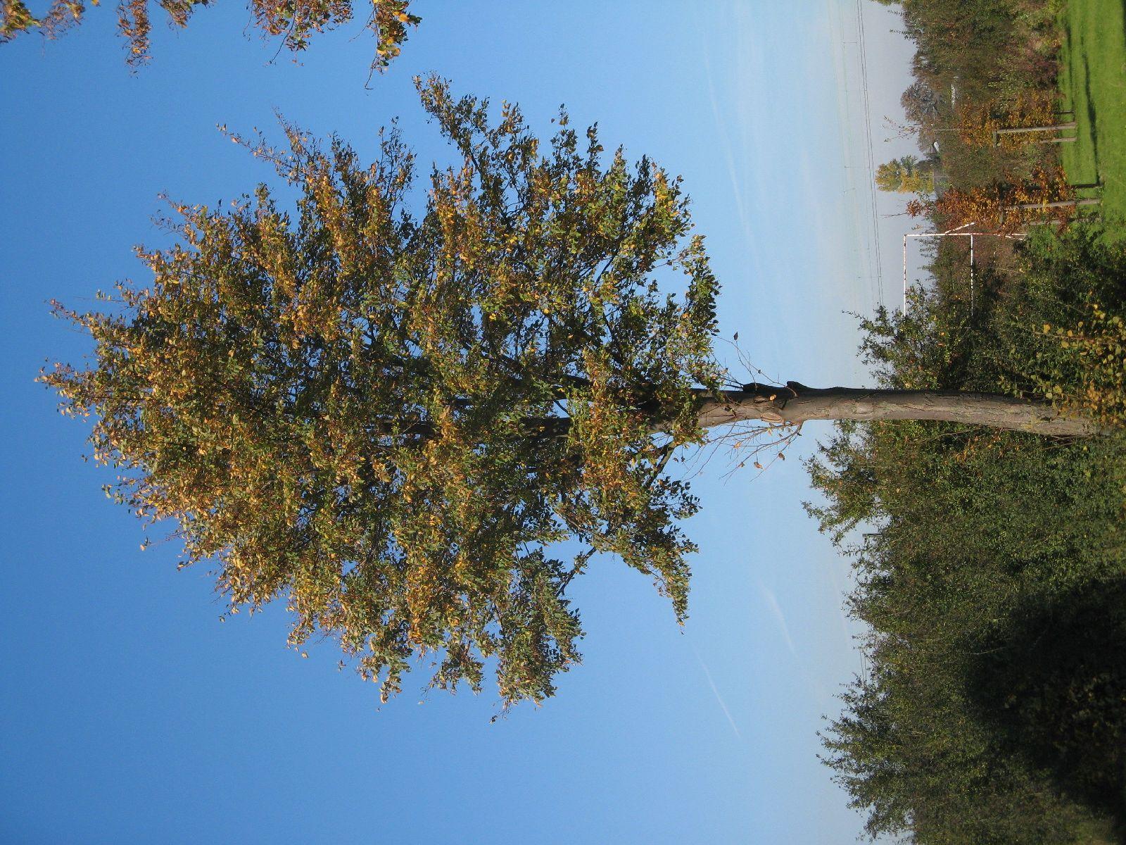 Pflanzen-Baum-Foto_Textur_B_3731