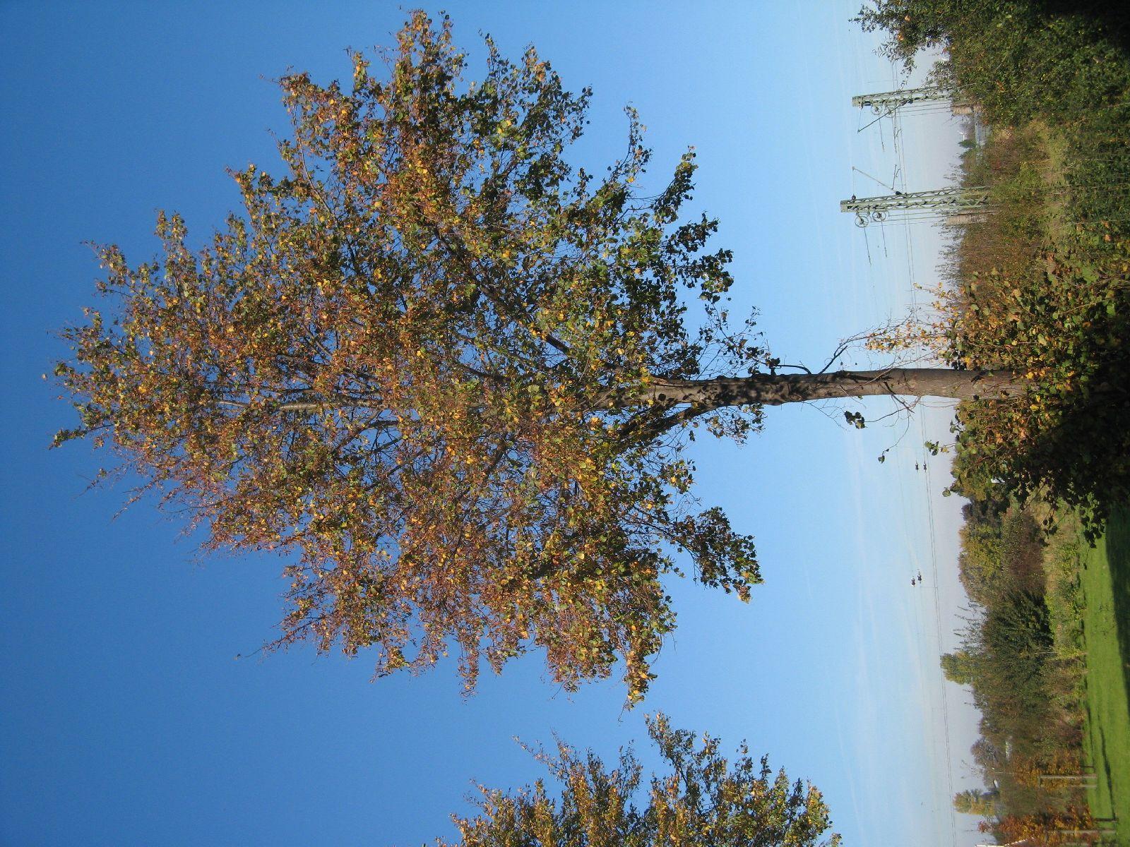 Pflanzen-Baum-Foto_Textur_B_3732