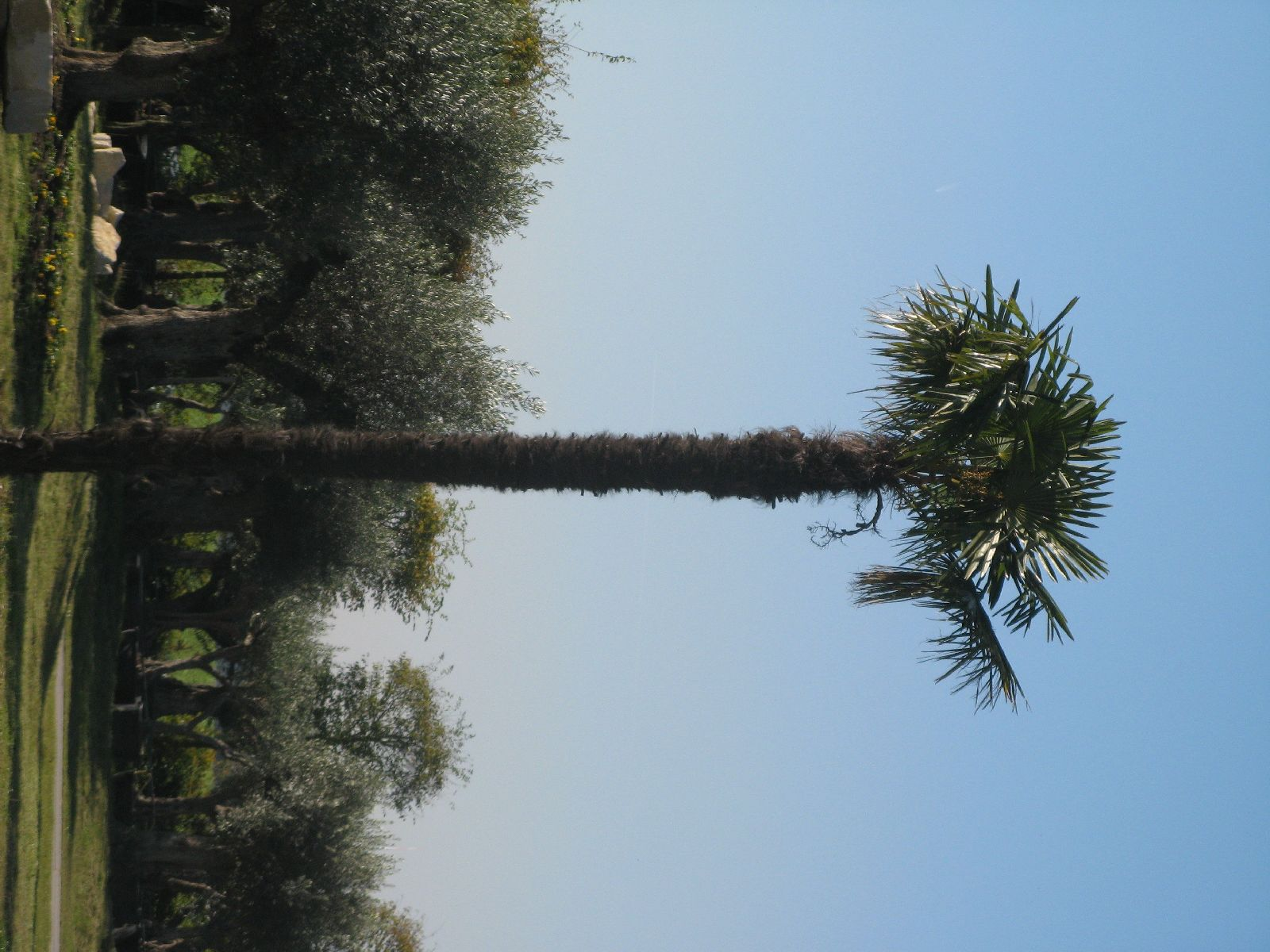 Pflanzen-Baum-Foto_Textur_B_3736