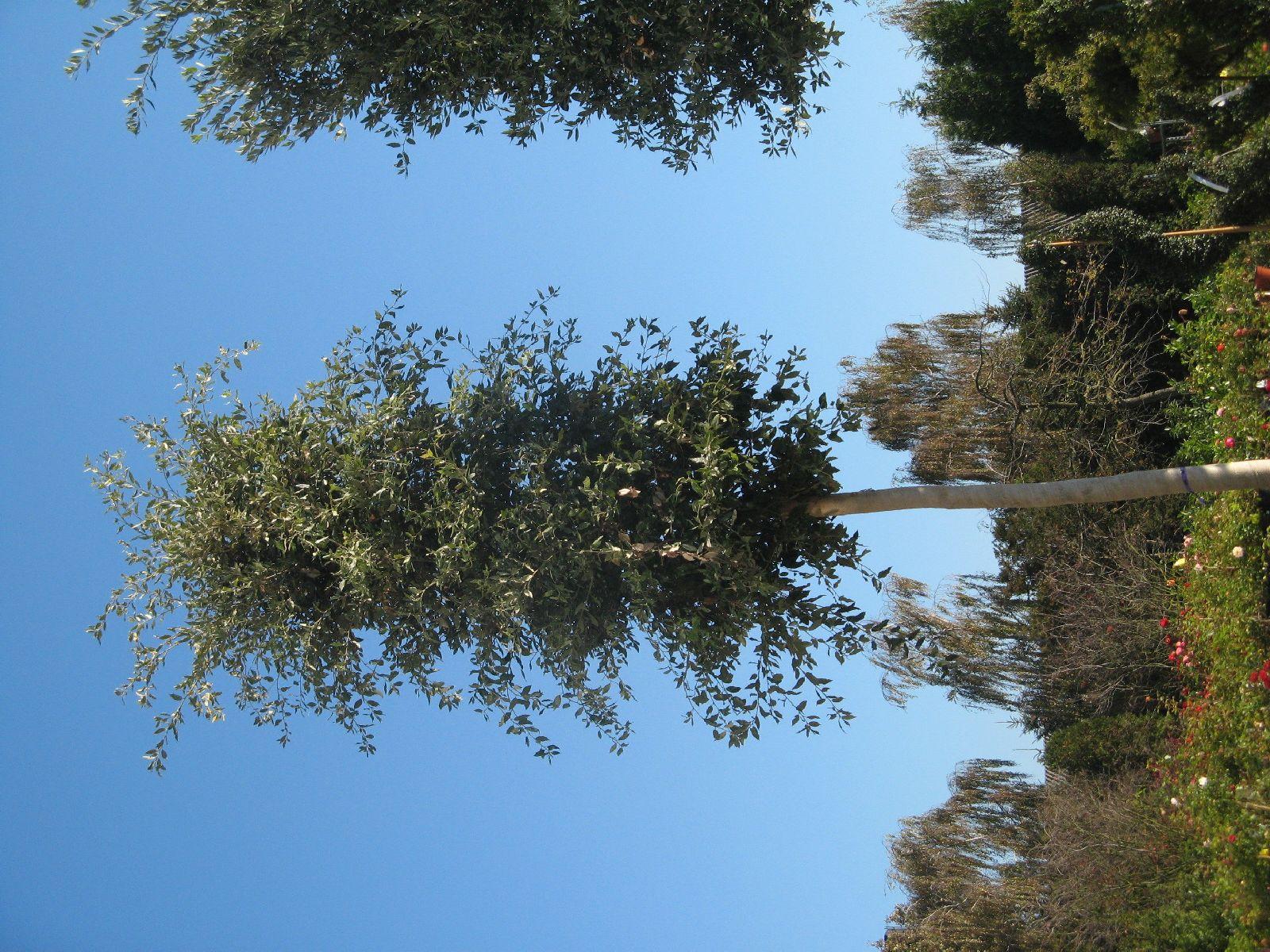 Pflanzen-Baum-Foto_Textur_B_3741