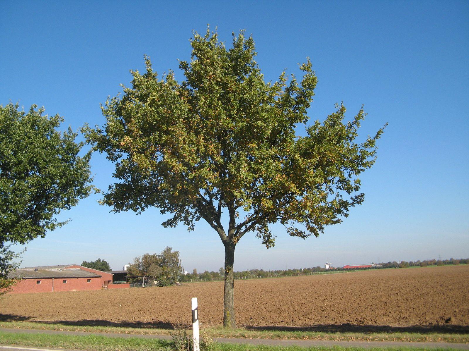 Pflanzen-Baum-Foto_Textur_B_3747