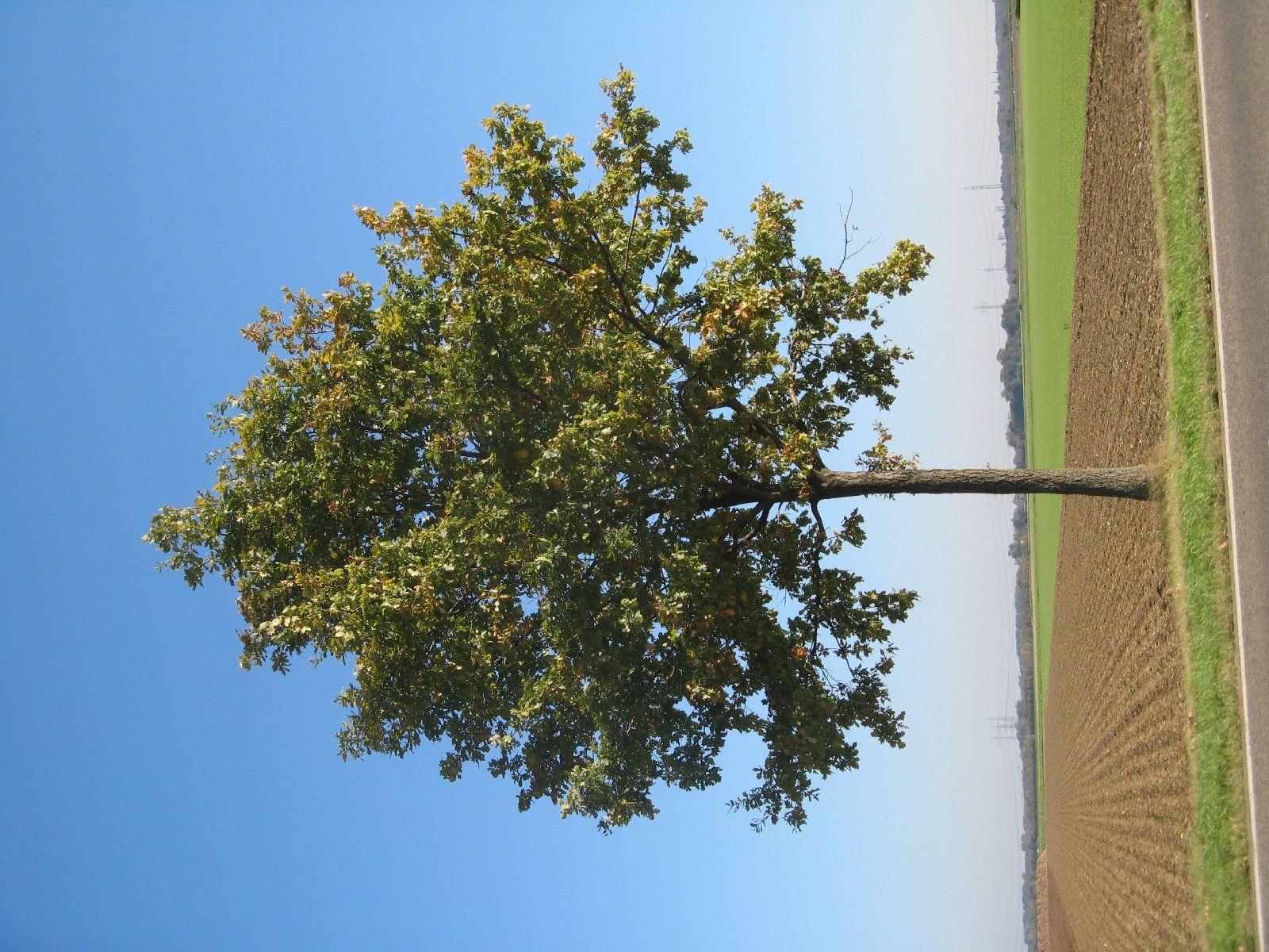 Pflanzen-Baum-Foto_Textur_B_3748