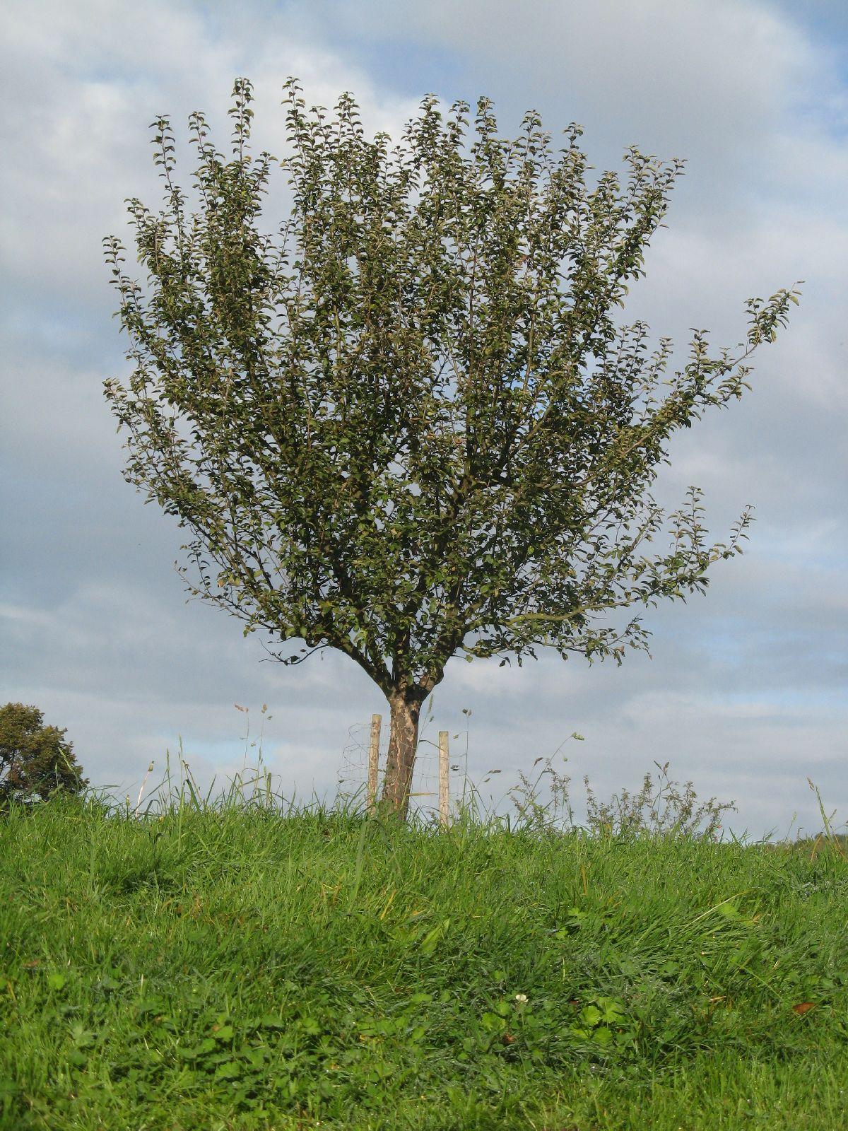 Pflanzen-Baum-Foto_Textur_B_3762