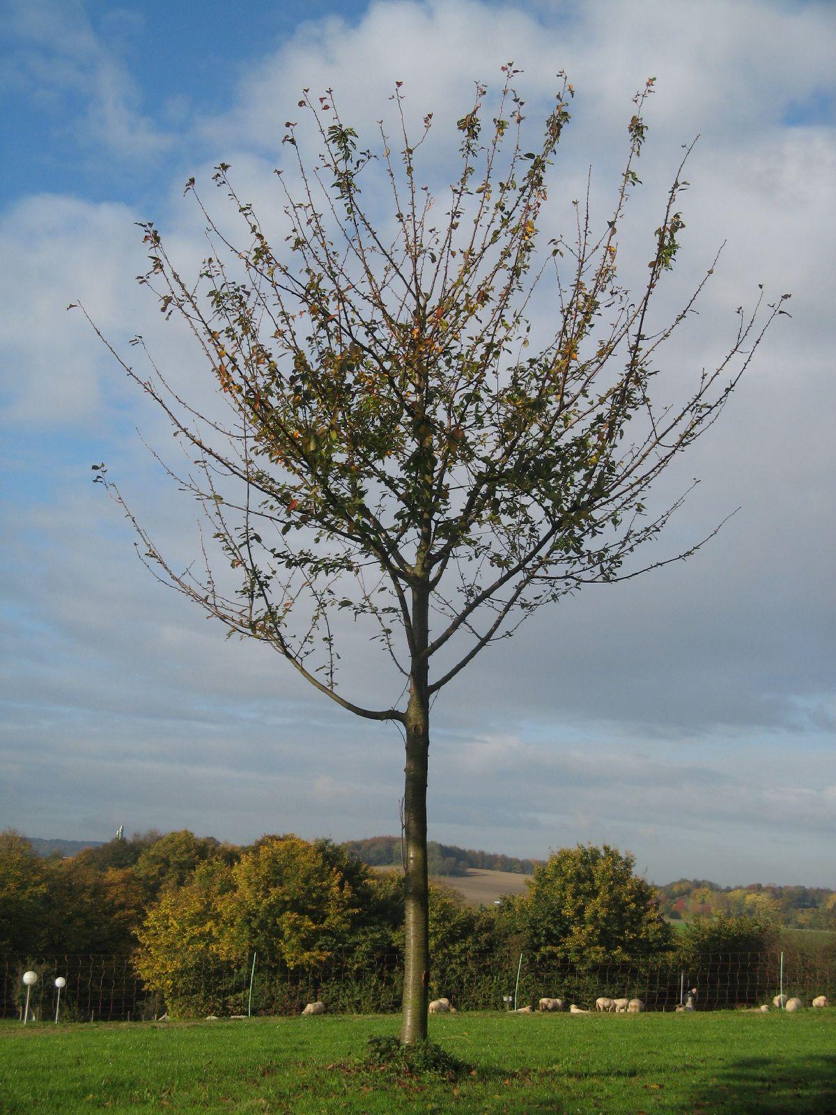 Pflanzen-Baum-Foto_Textur_B_3768