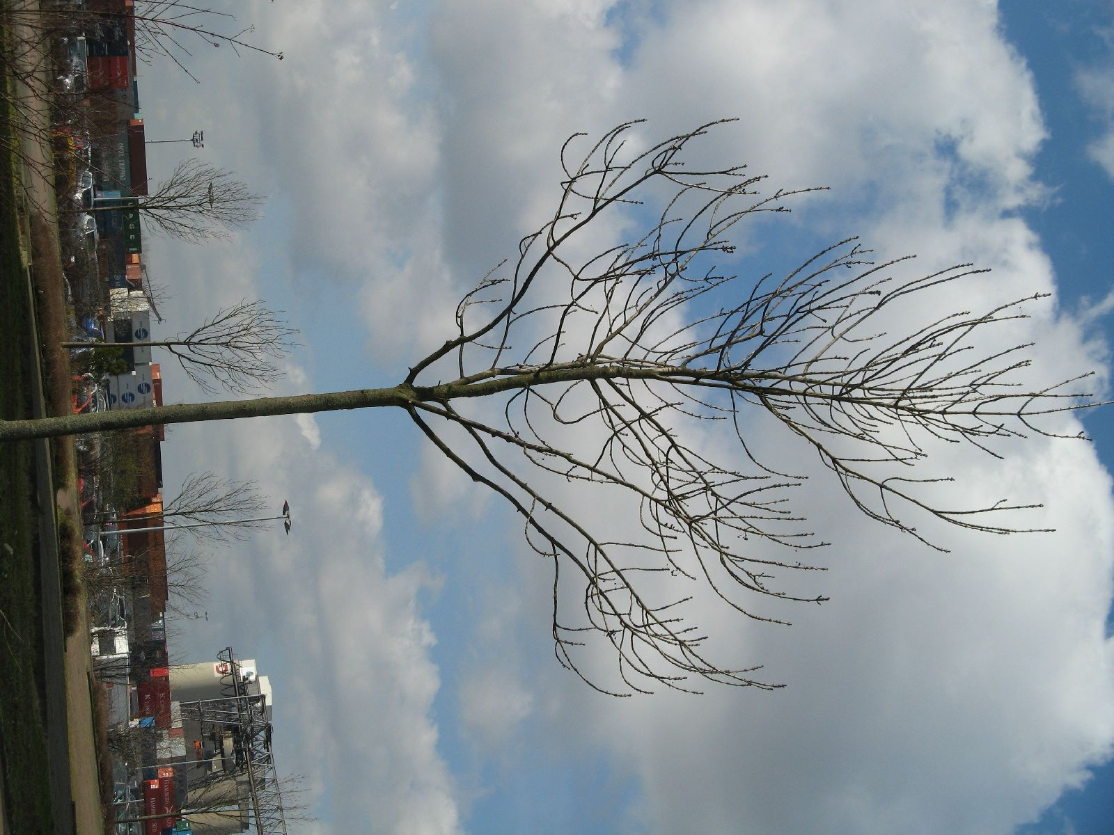 Pflanzen-Baum-Foto_Textur_B_41190
