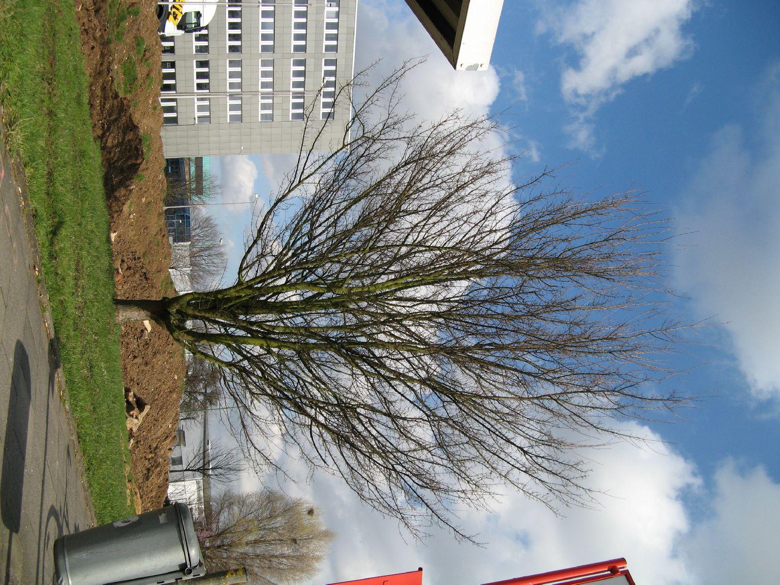 Pflanzen-Baum-Foto_Textur_B_41270