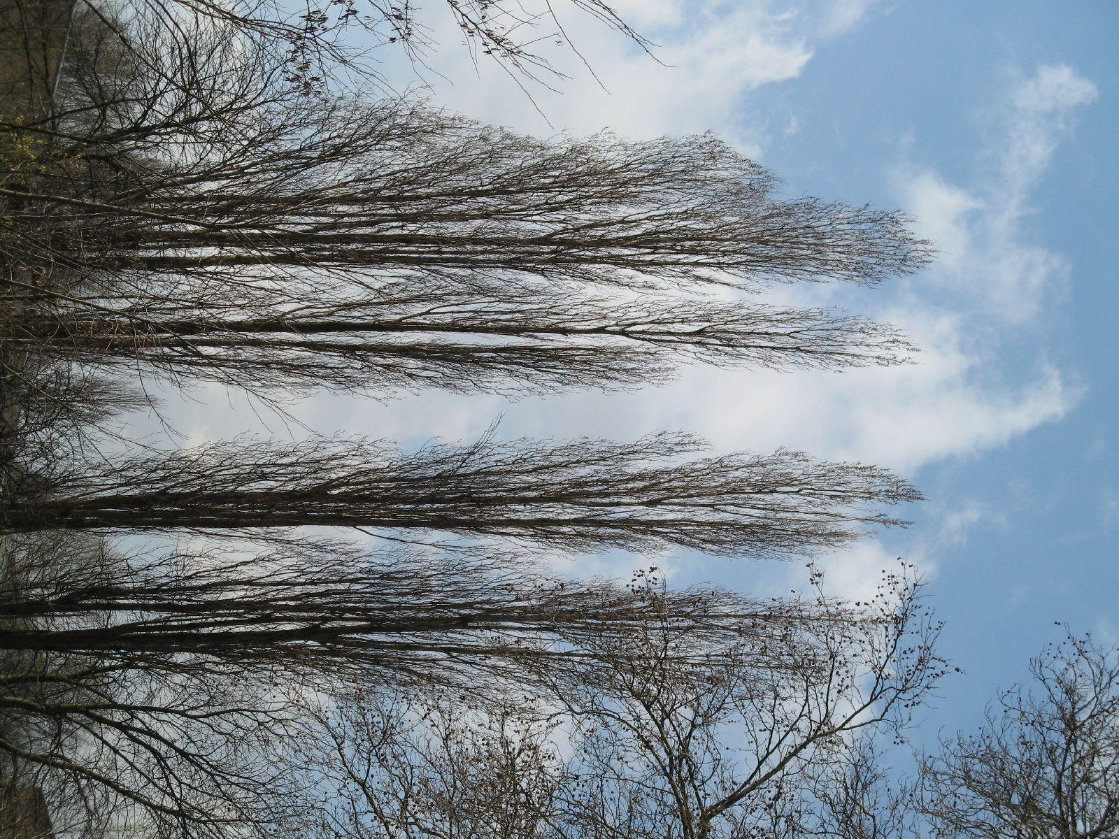 Pflanzen-Baum-Foto_Textur_B_41320