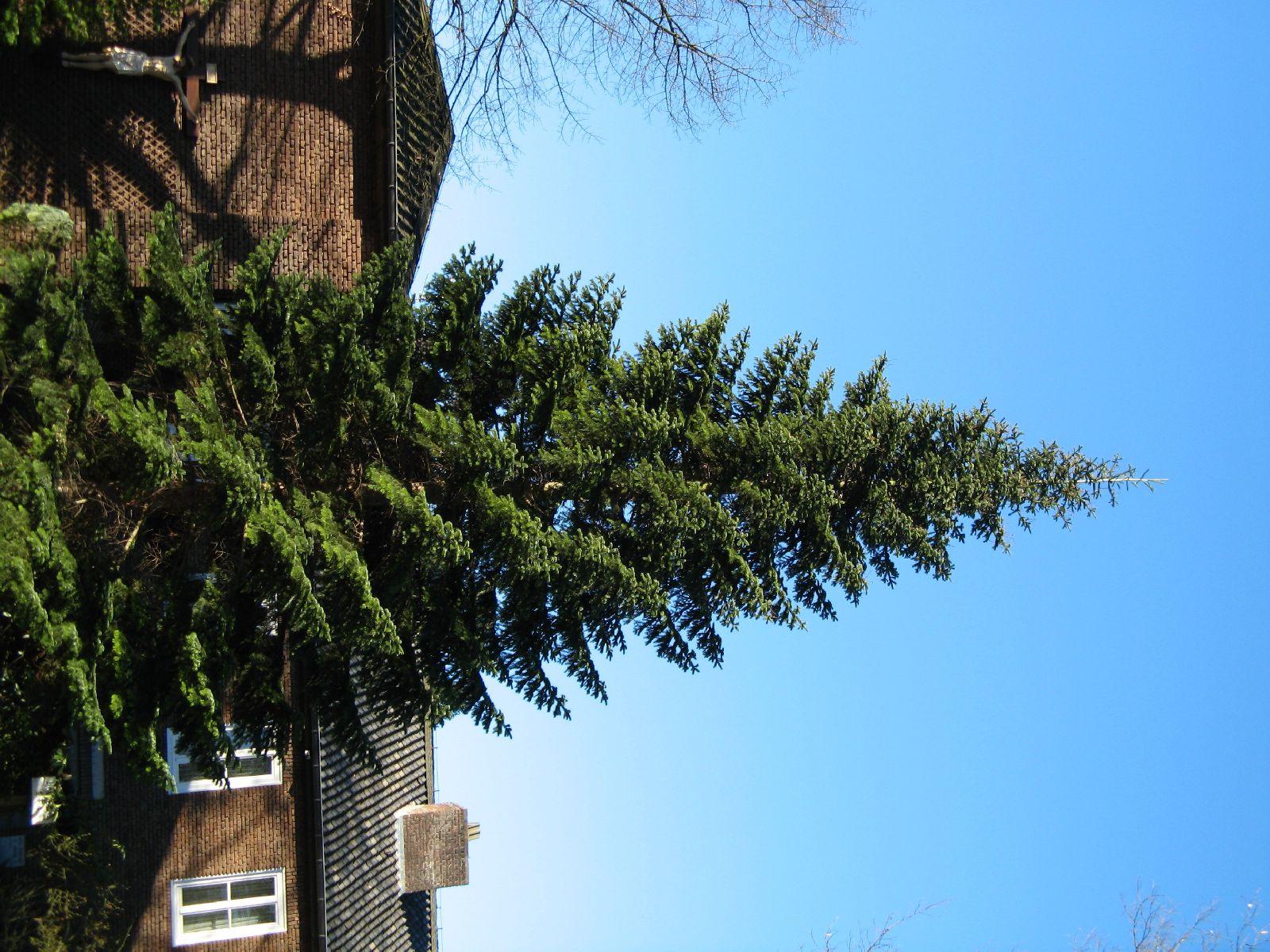 Pflanzen-Baum-Foto_Textur_B_42230