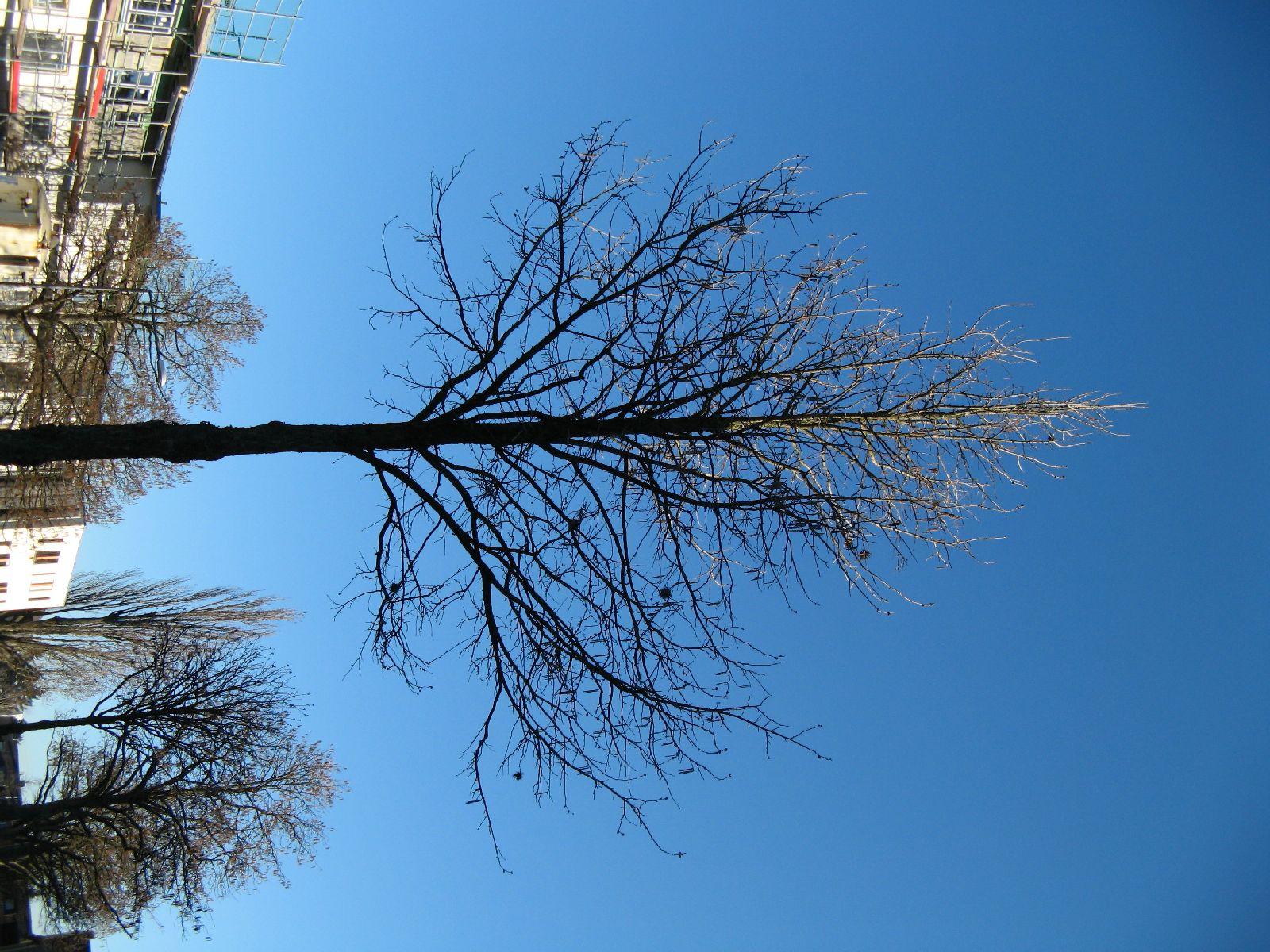 Pflanzen-Baum-Foto_Textur_B_42360