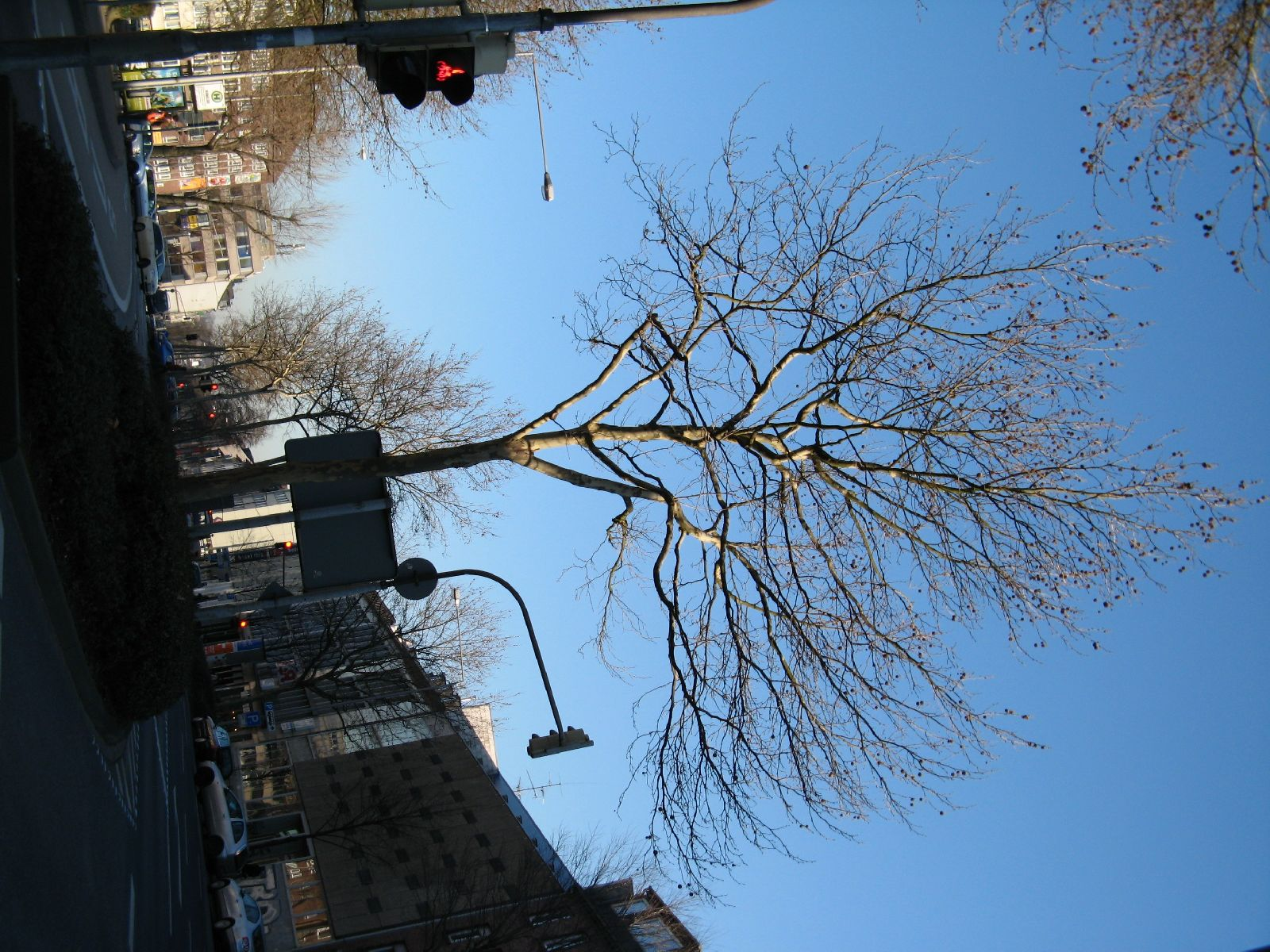 Pflanzen-Baum-Foto_Textur_B_42490