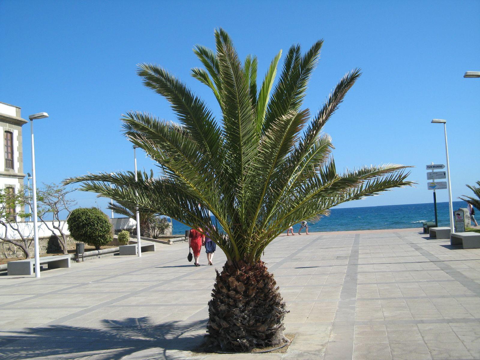 Pflanzen-Baum-Foto_Textur_B_7683