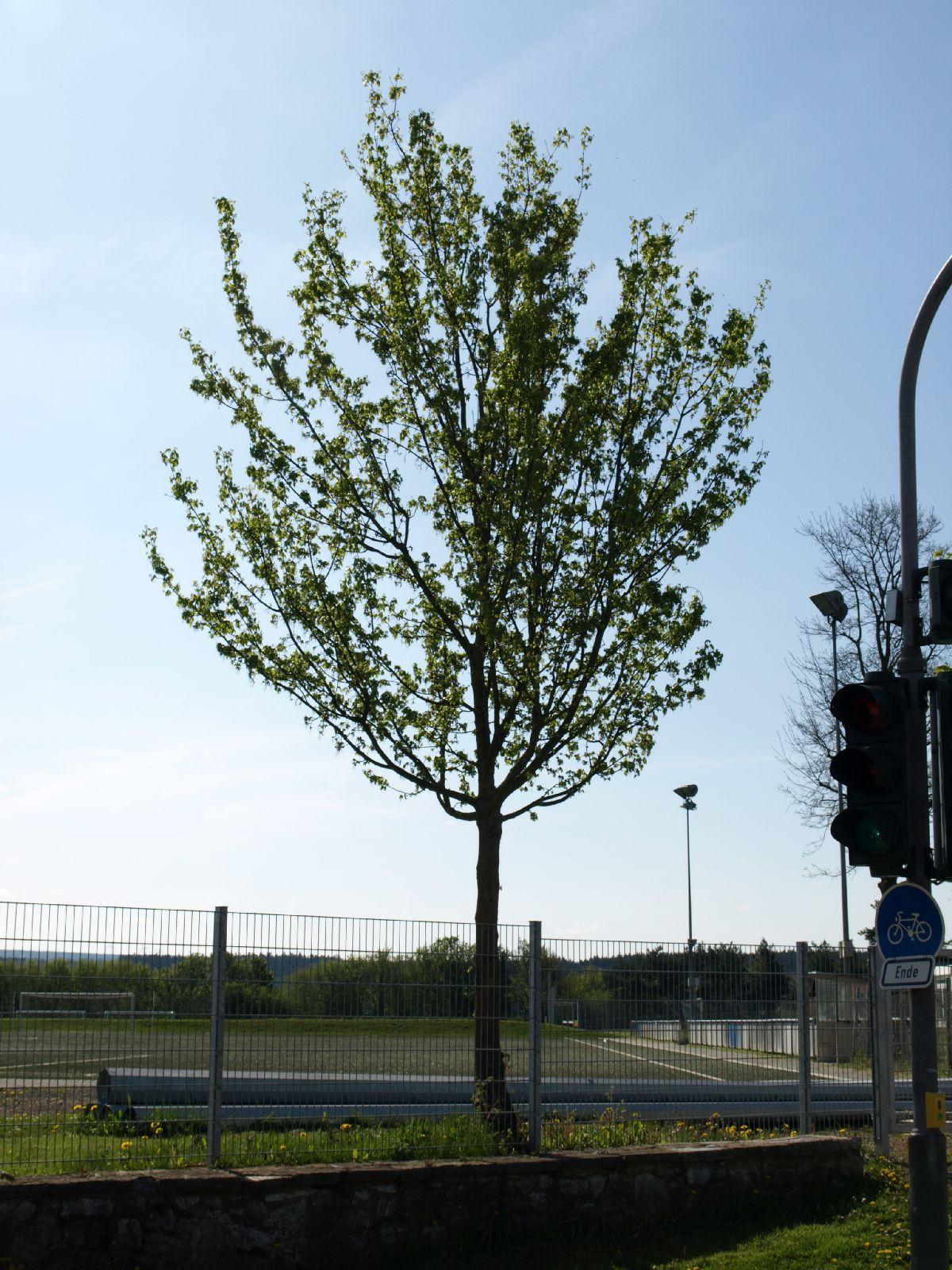 Pflanzen-Baum-Foto_Textur_B_P5032298