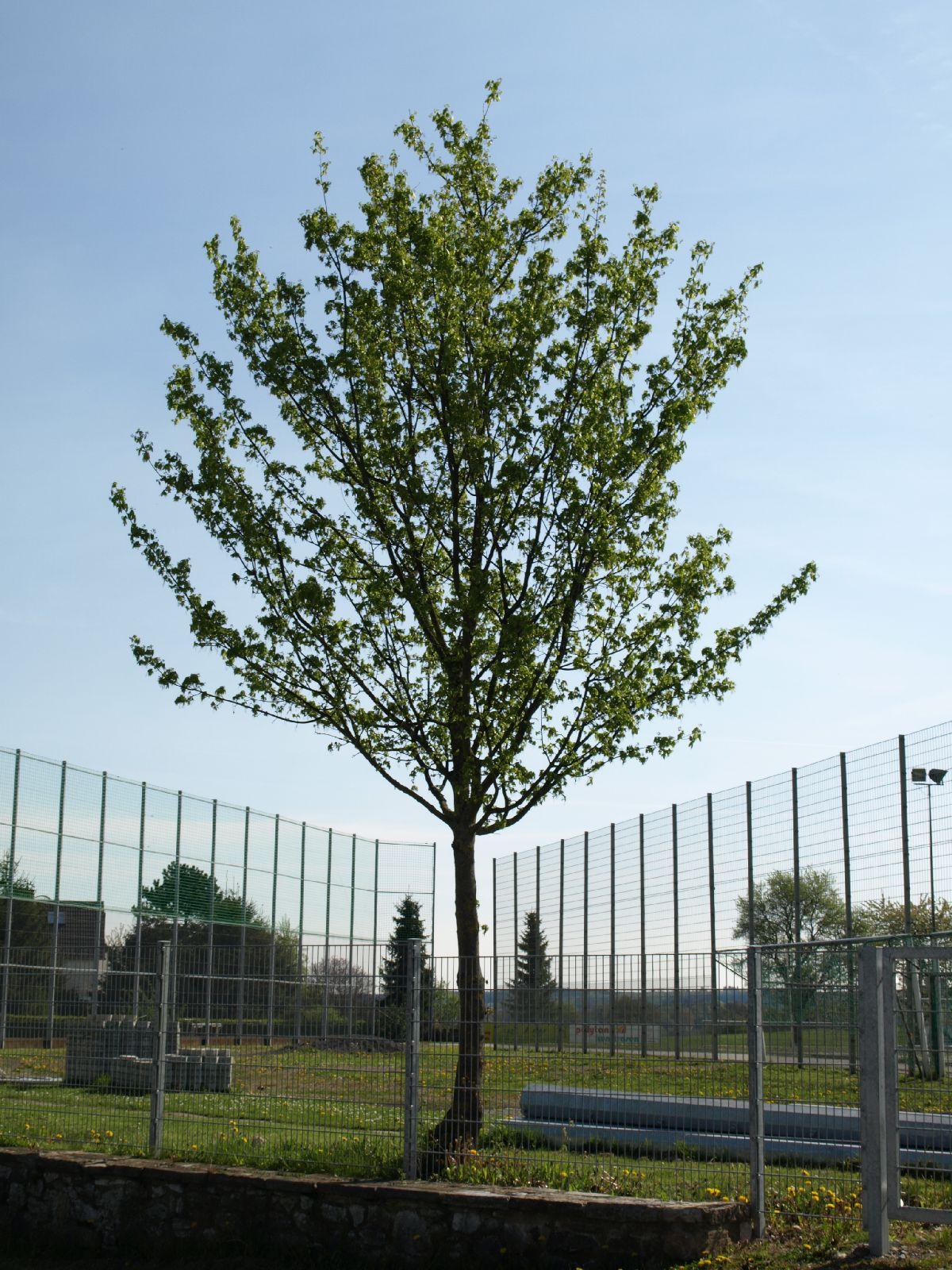Pflanzen-Baum-Foto_Textur_B_P5032300