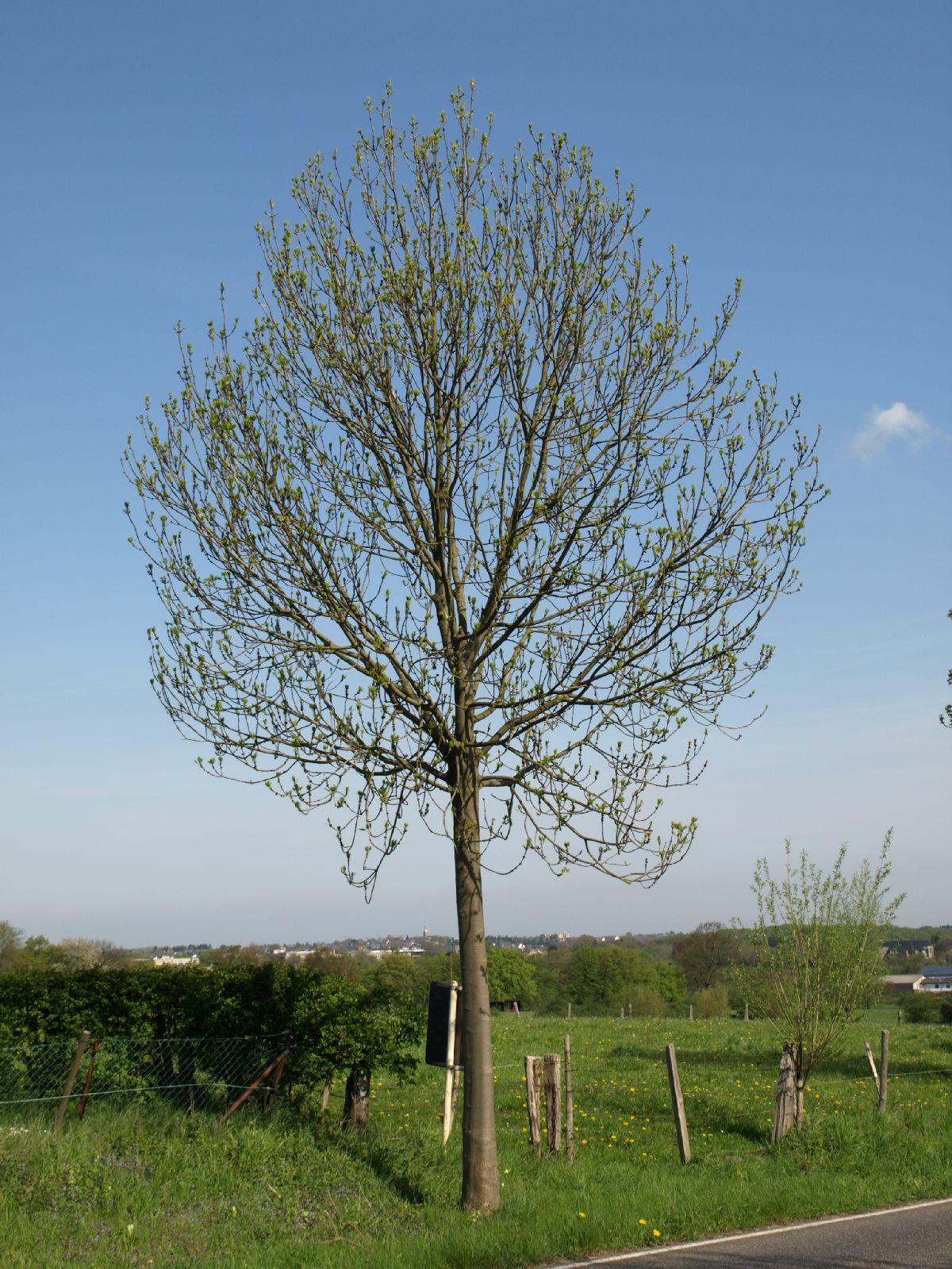 Pflanzen-Baum-Foto_Textur_B_P5032308