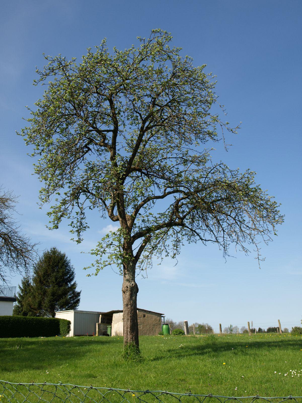 Pflanzen-Baum-Foto_Textur_B_P5032319