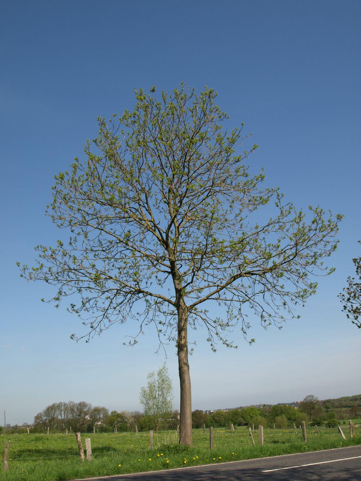Pflanzen-Baum-Foto_Textur_B_P5032321