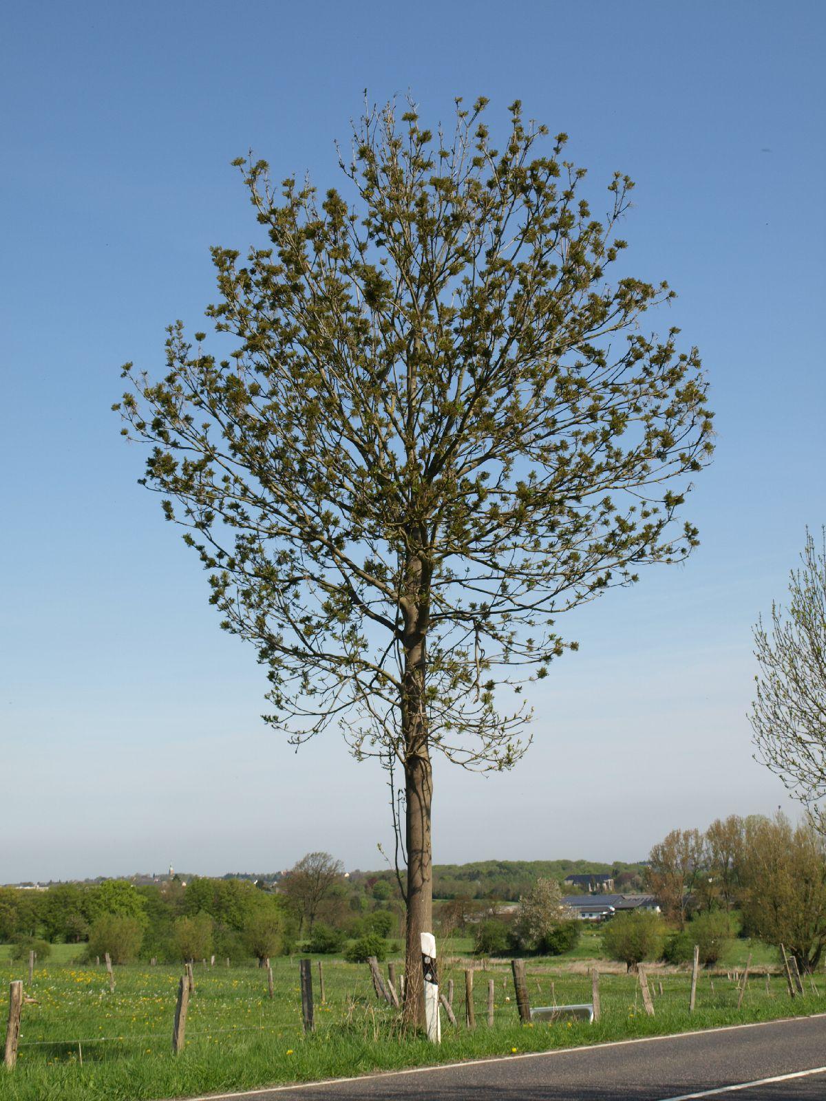 Pflanzen-Baum-Foto_Textur_B_P5032322