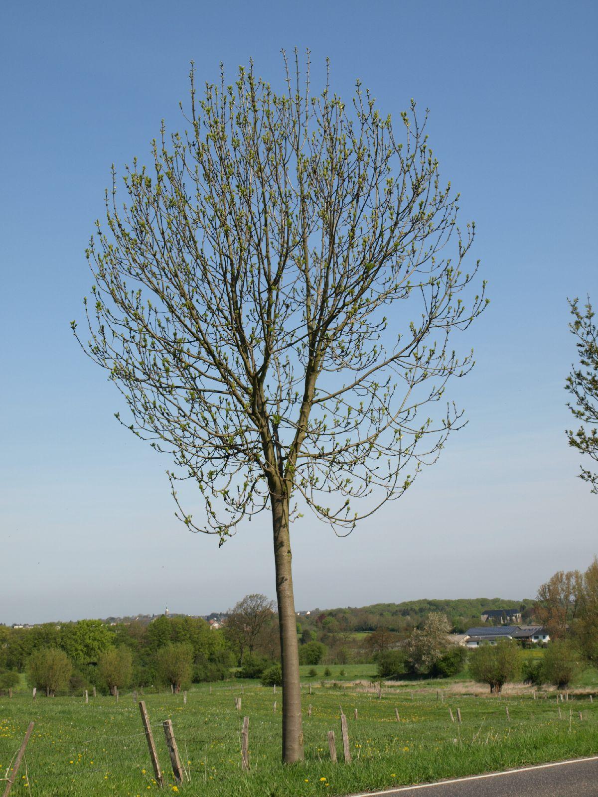 Pflanzen-Baum-Foto_Textur_B_P5032323