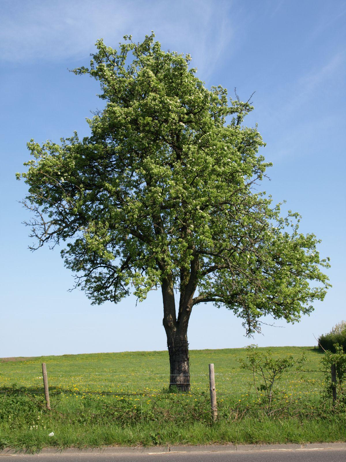 Pflanzen-Baum-Foto_Textur_B_P5042363