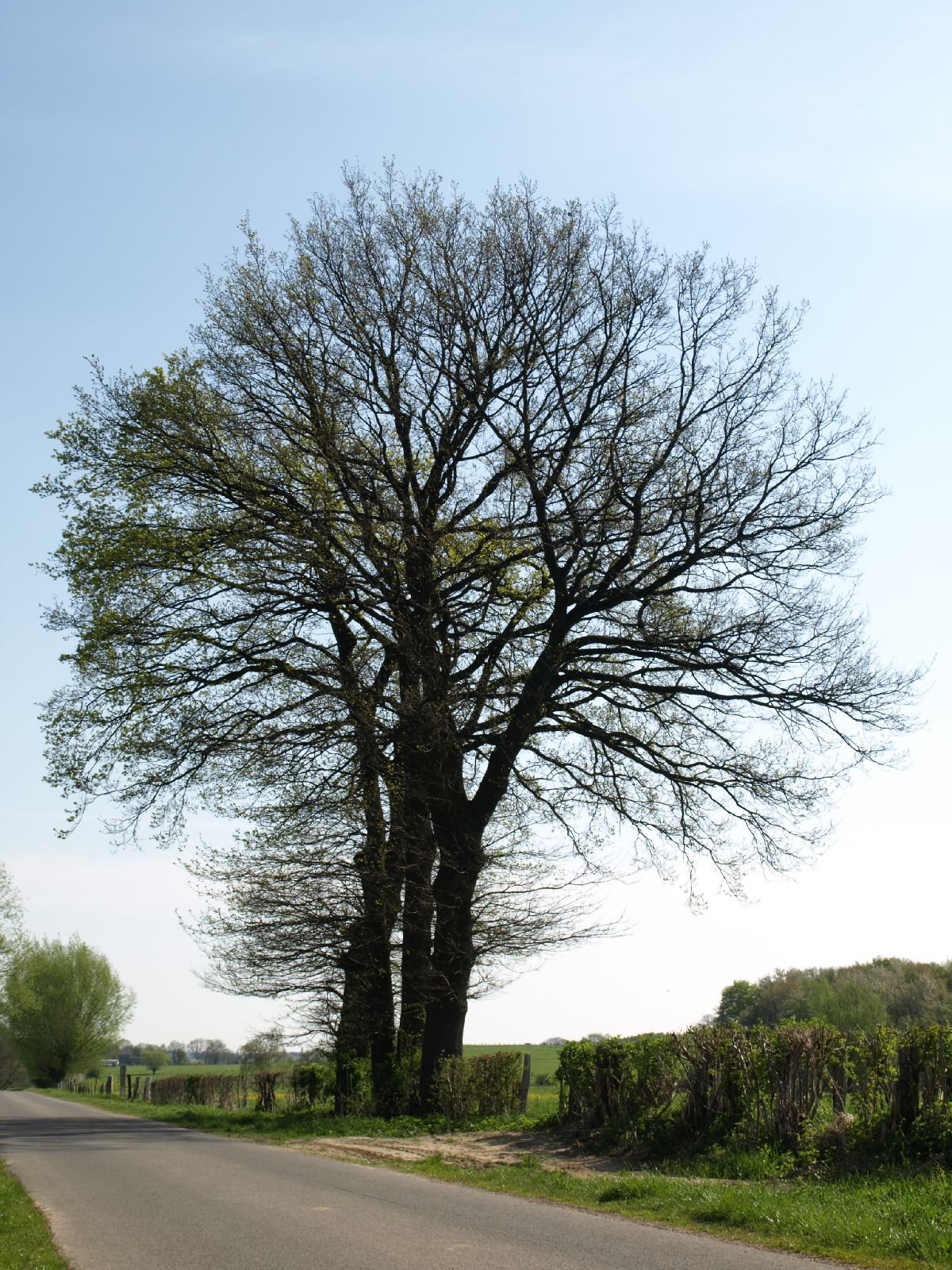 Pflanzen-Baum-Foto_Textur_B_P5042367