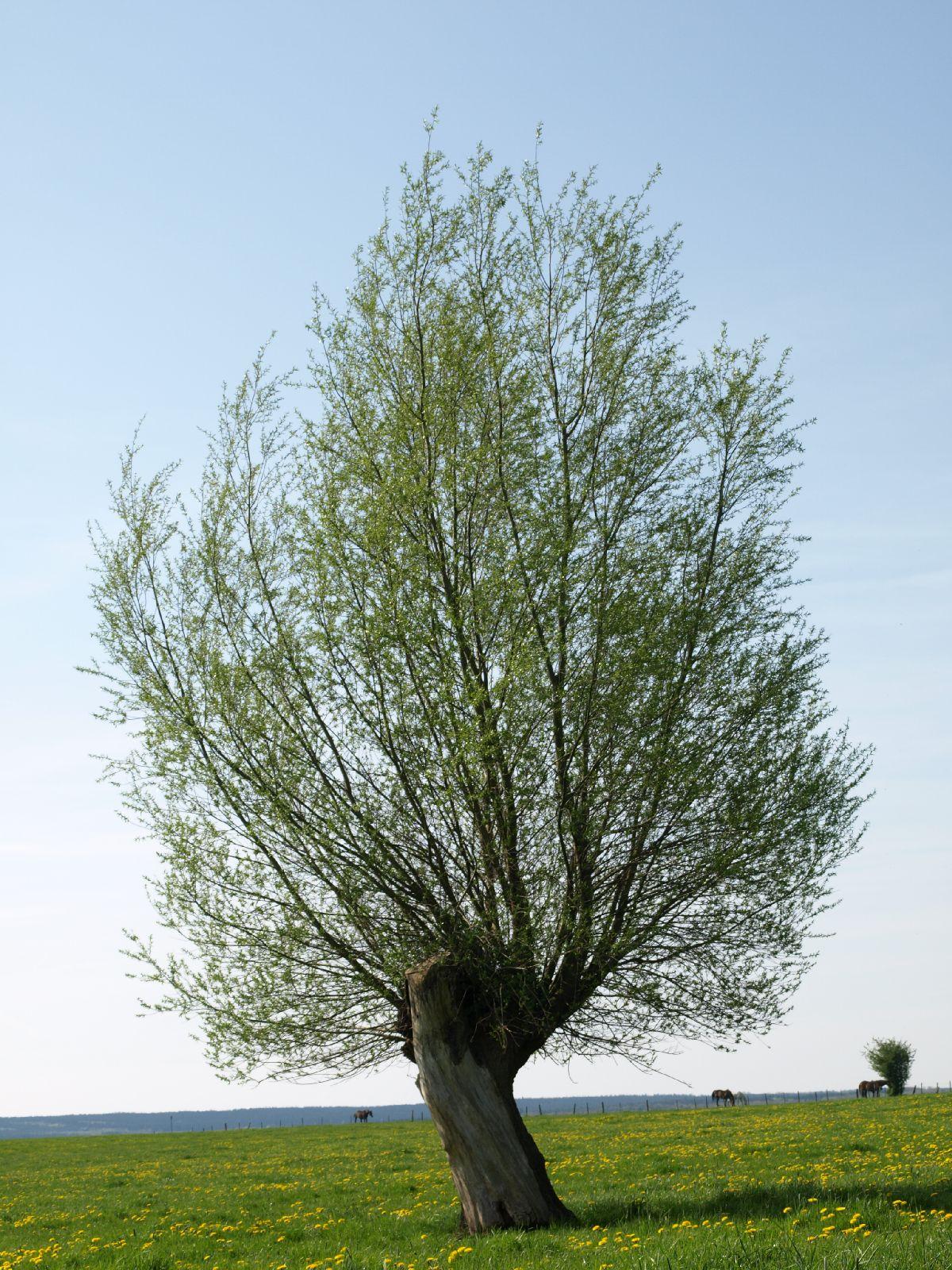Pflanzen-Baum-Foto_Textur_B_P5042373