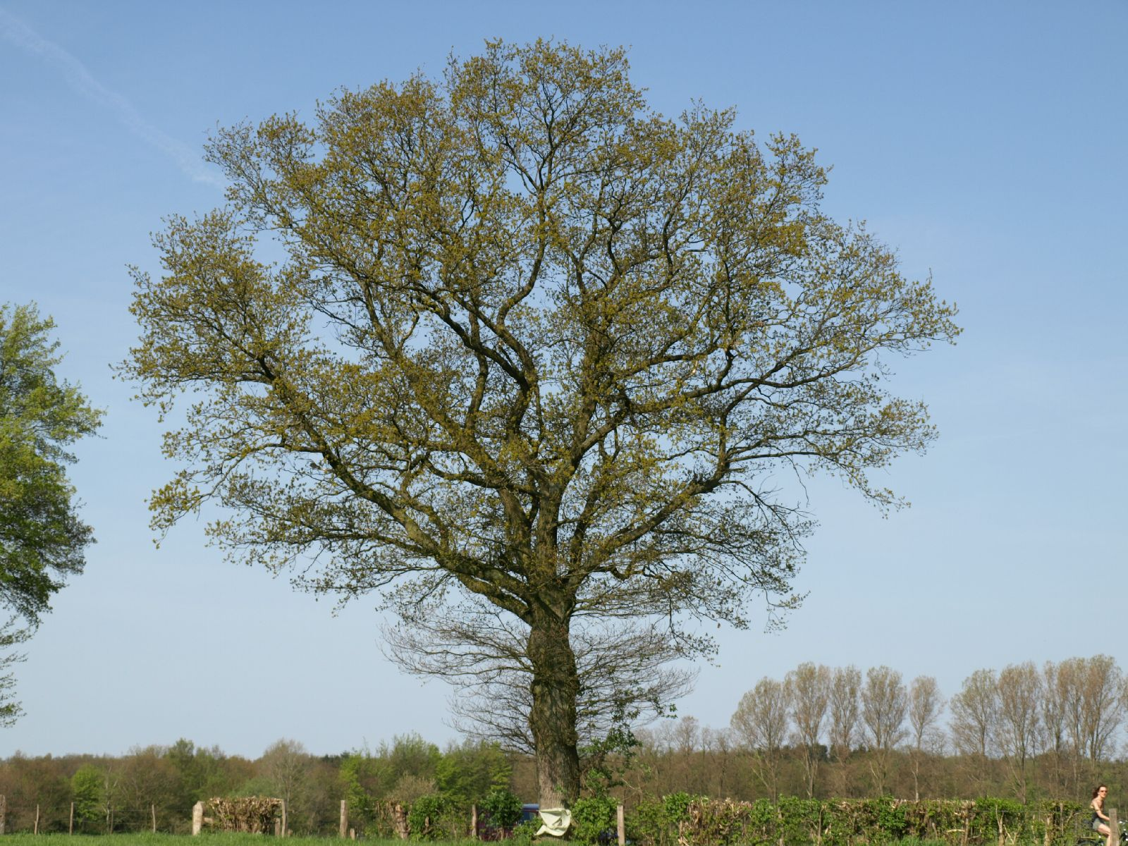 Pflanzen-Baum-Foto_Textur_B_P5042379