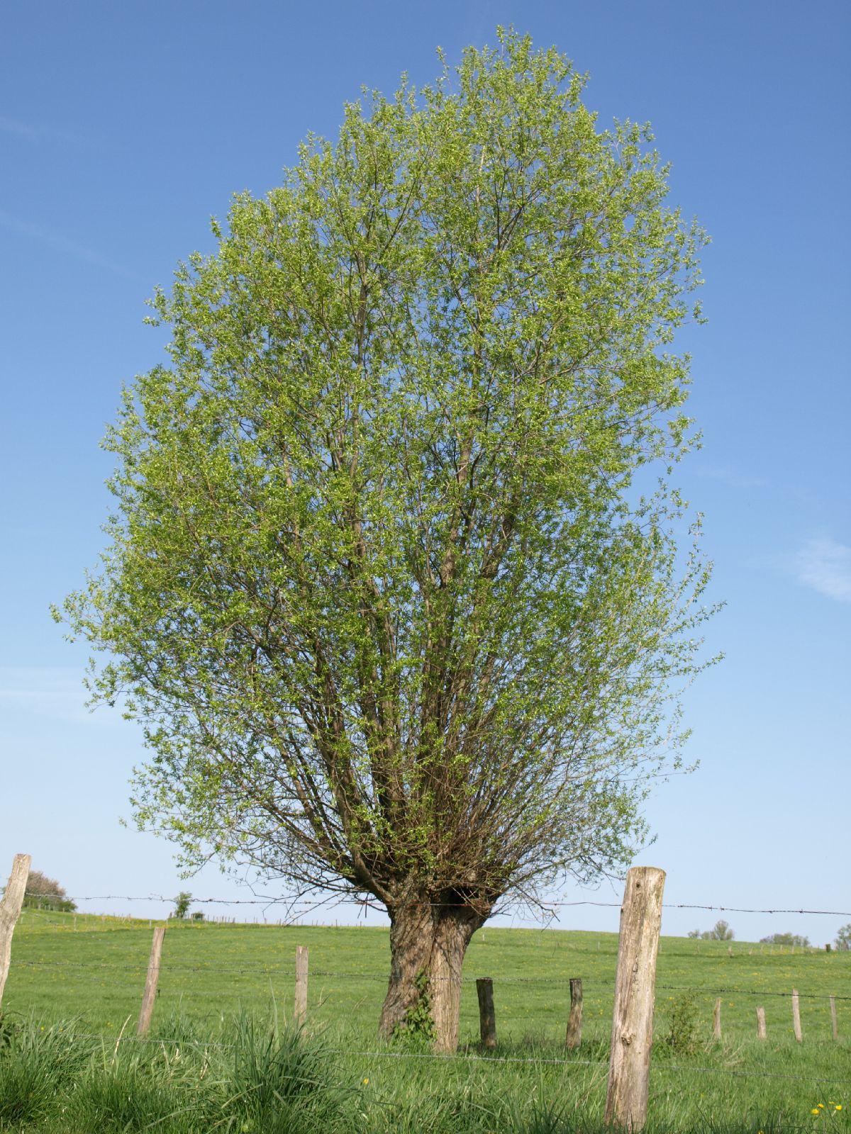 Pflanzen-Baum-Foto_Textur_B_P5042387