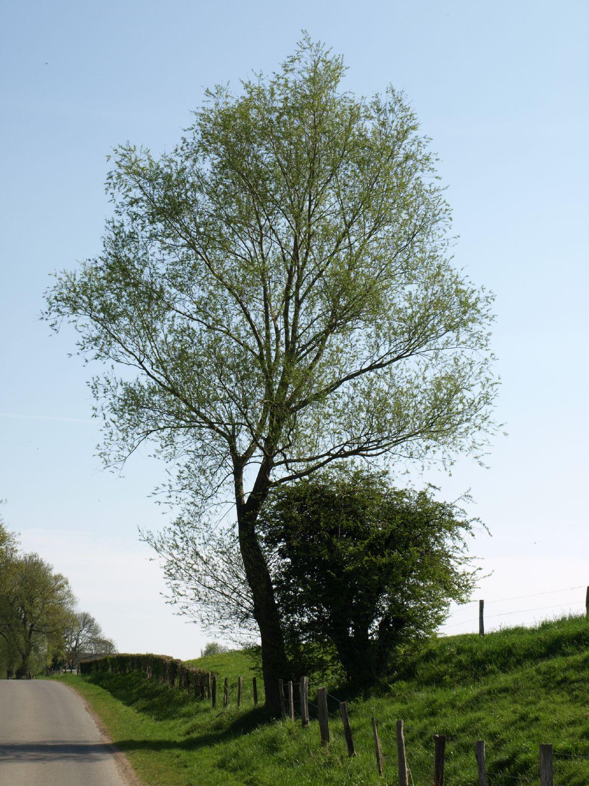Pflanzen-Baum-Foto_Textur_B_P5042392