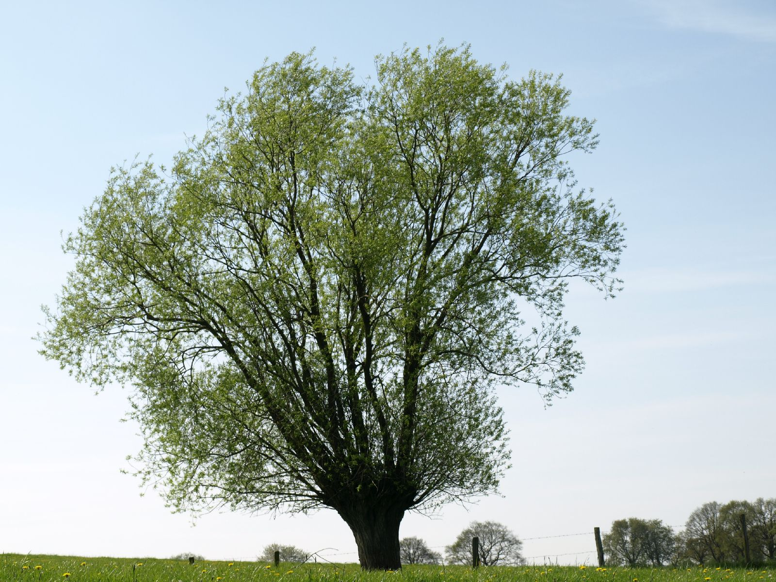 Pflanzen-Baum-Foto_Textur_B_P5042394