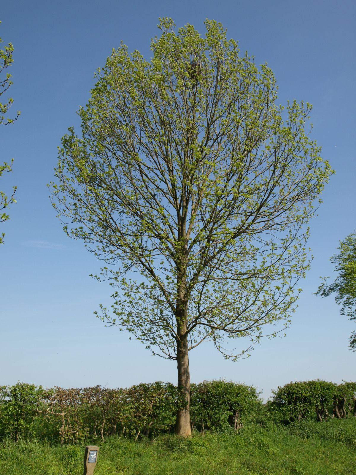 Pflanzen-Baum-Foto_Textur_B_P5042408