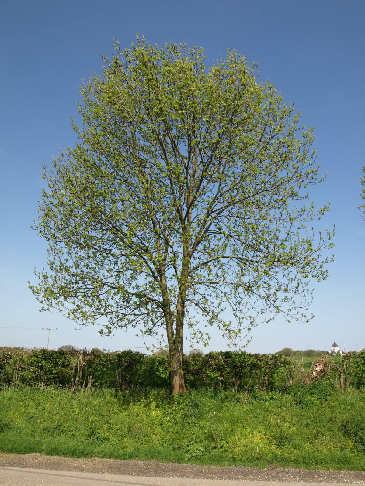 Pflanzen-Baum-Foto_Textur_B_P5042409