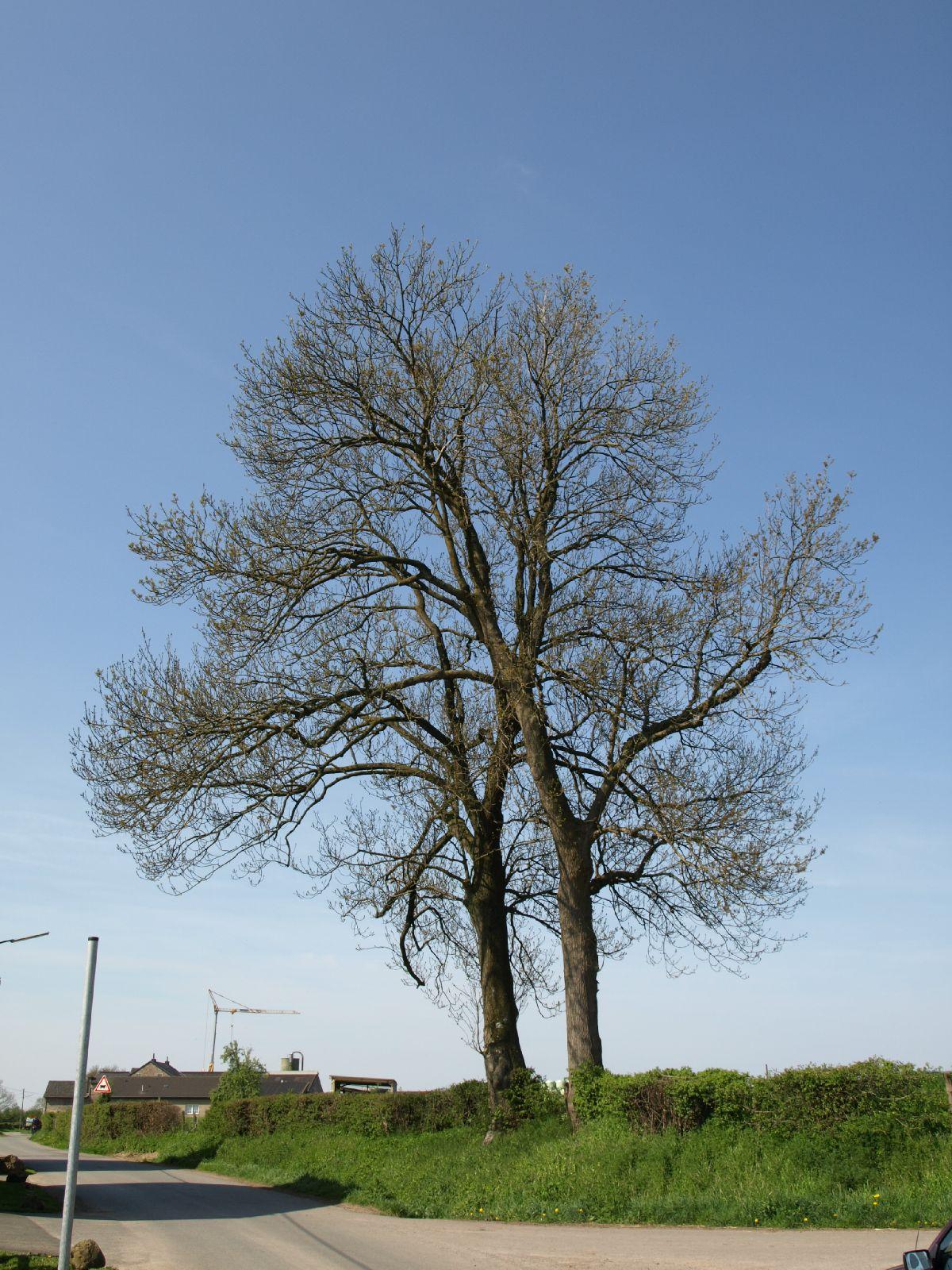 Pflanzen-Baum-Foto_Textur_B_P5042410
