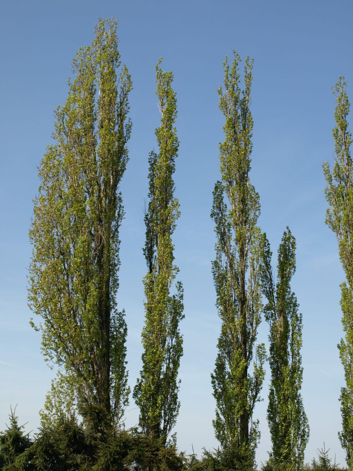 Pflanzen-Baum-Foto_Textur_B_P5042417