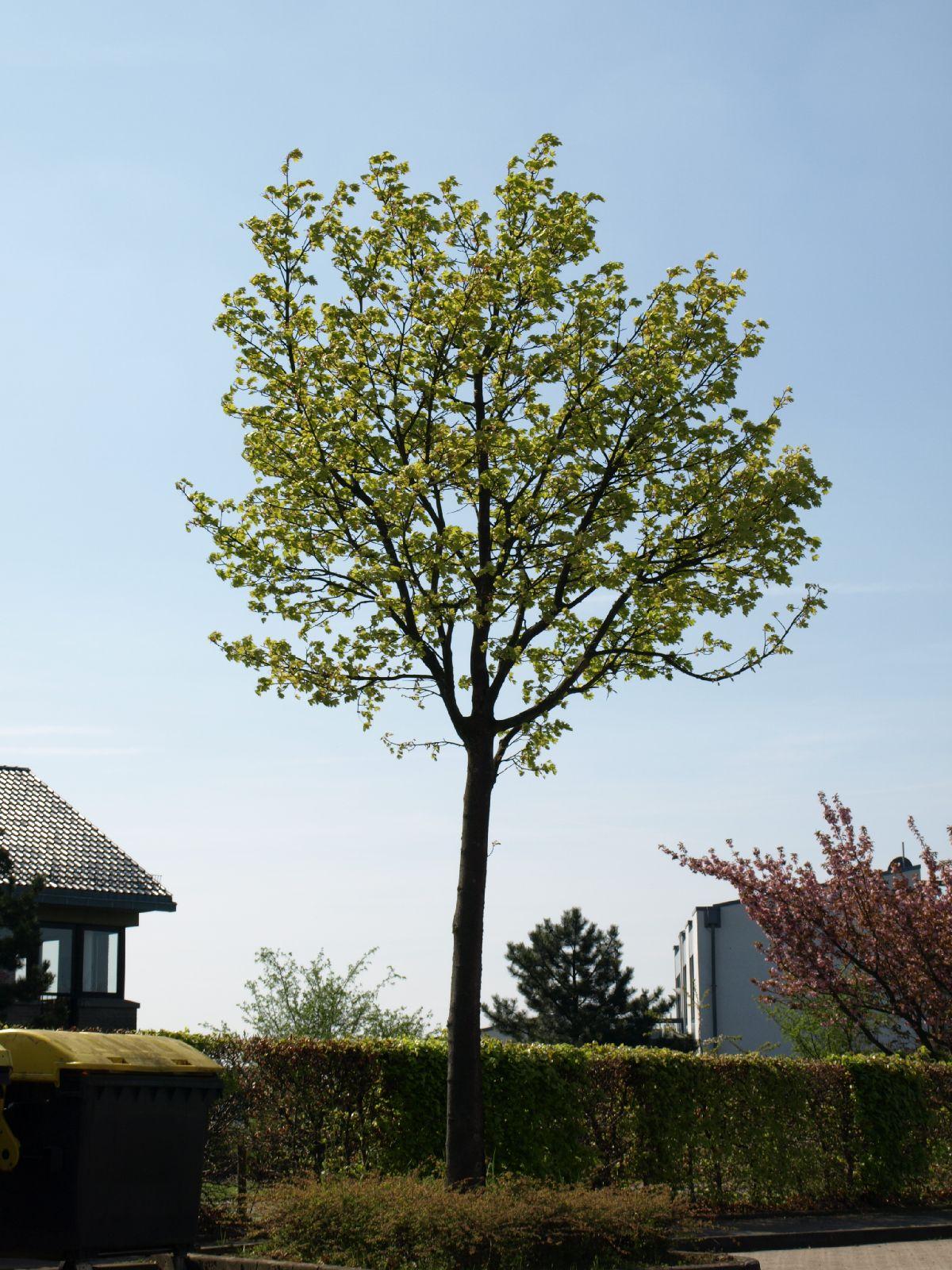 Pflanzen-Baum-Foto_Textur_B_P5042429