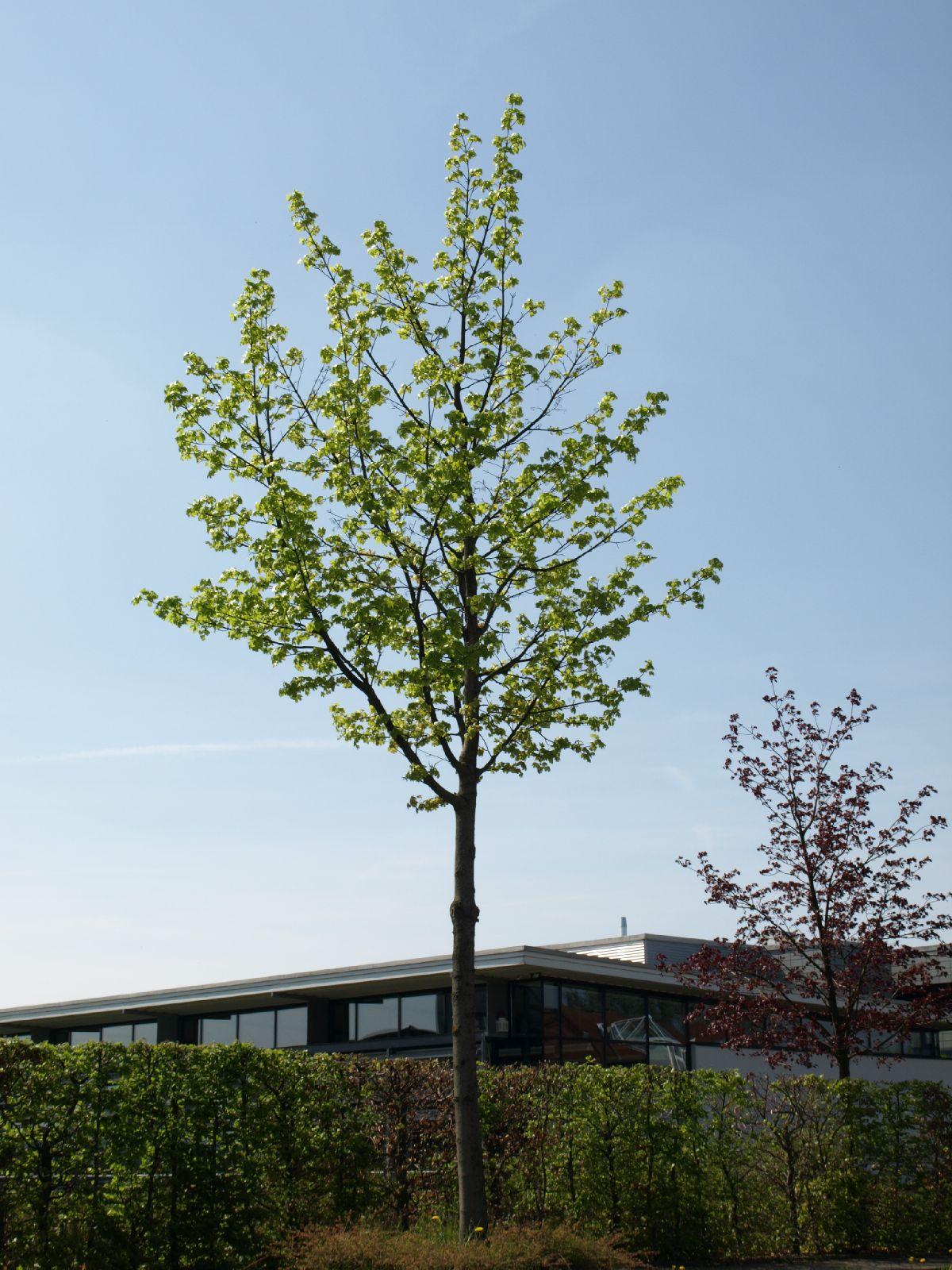 Pflanzen-Baum-Foto_Textur_B_P5042435