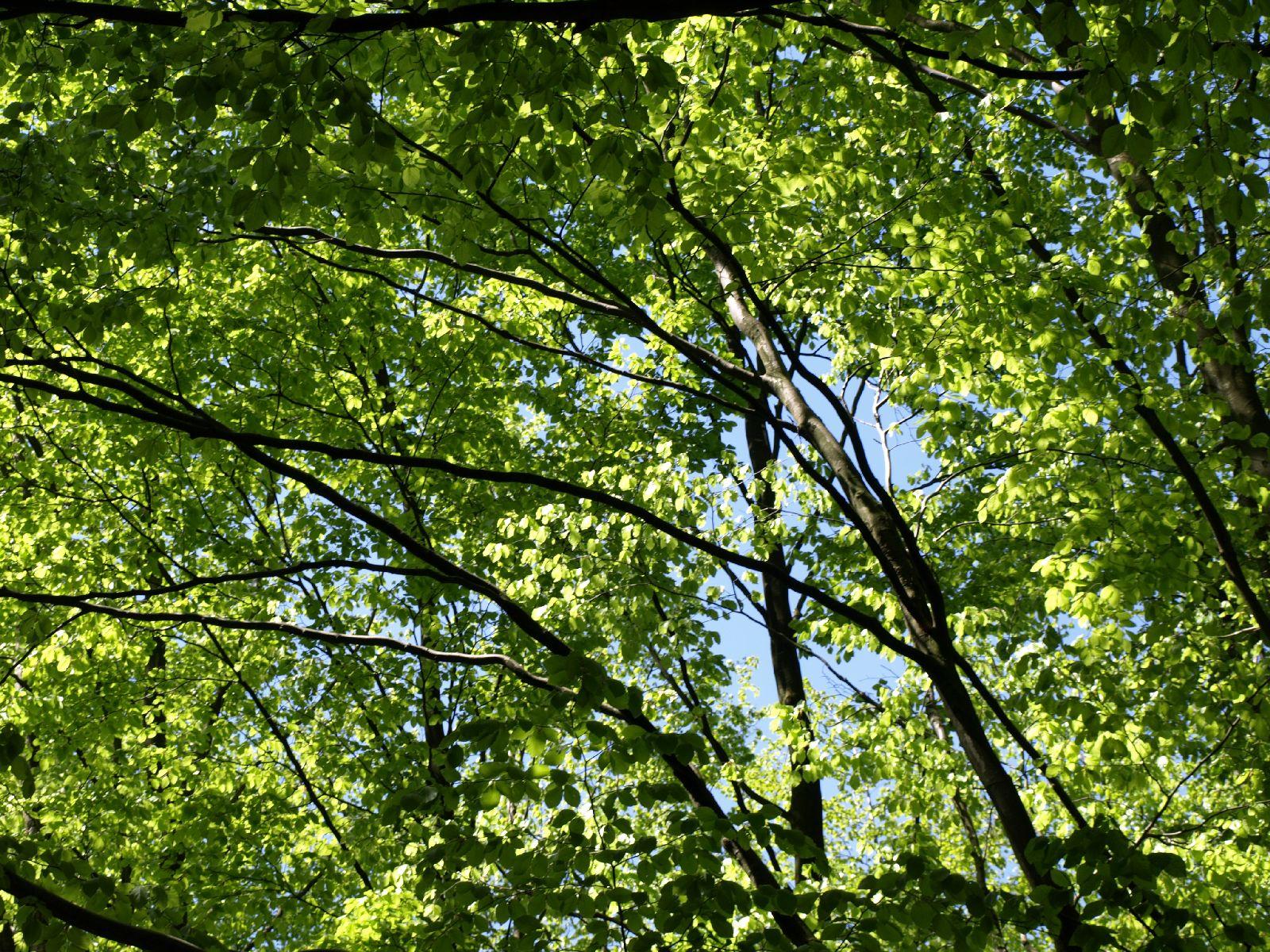 Pflanzen-Baum-Foto_Textur_B_P5042460