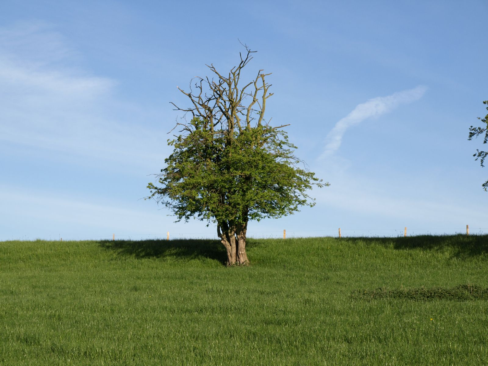 Pflanzen-Baum-Foto_Textur_B_P5052512