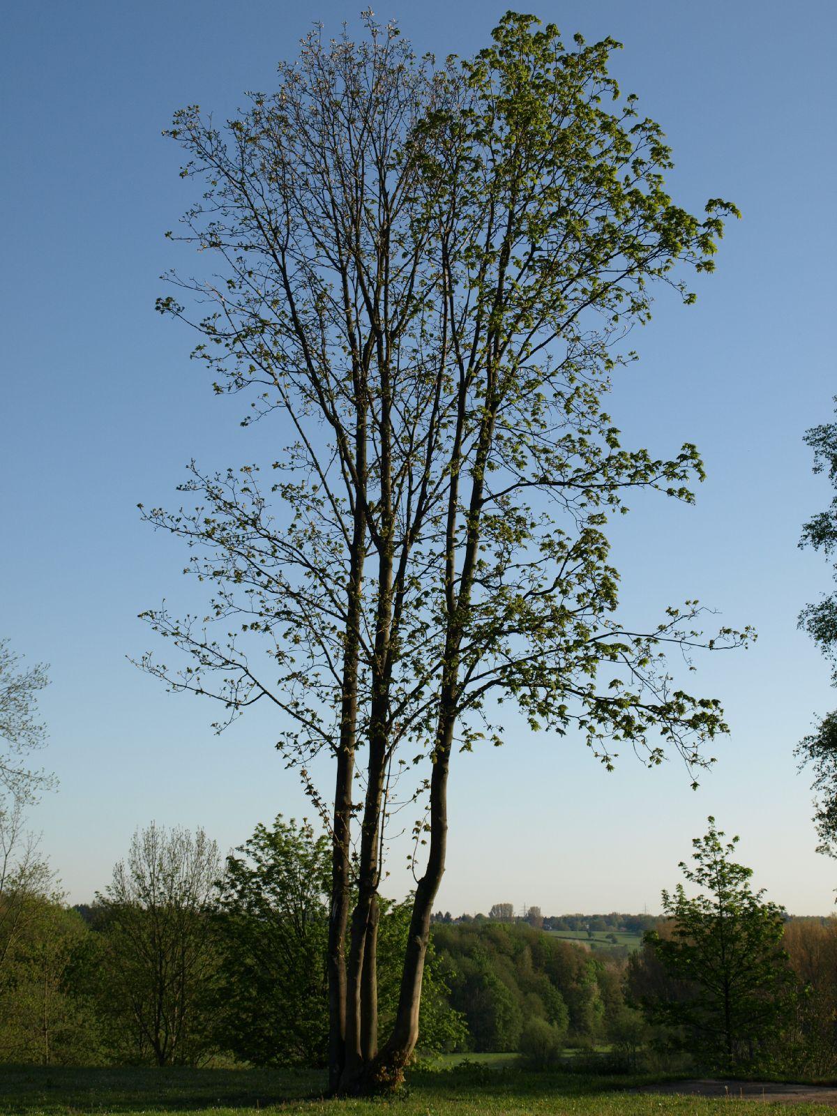 Pflanzen-Baum-Foto_Textur_B_P5052513