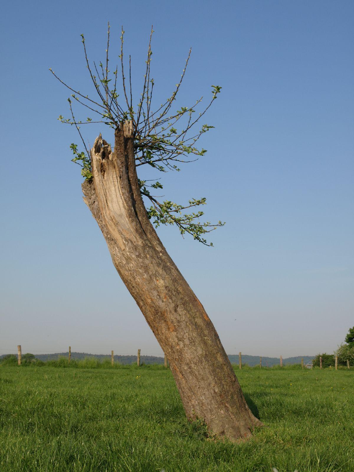 Pflanzen-Baum-Foto_Textur_B_P5142753